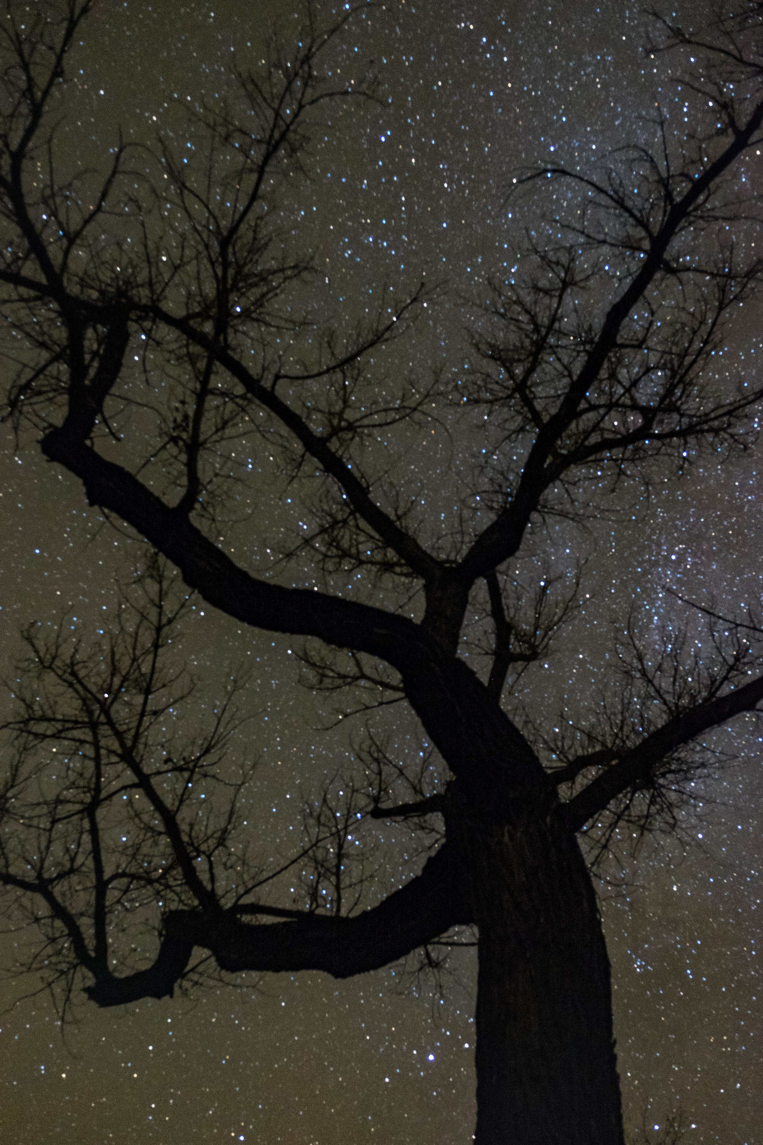 Stars shimmer behind a cottonwood tree in the northern unit of the park.