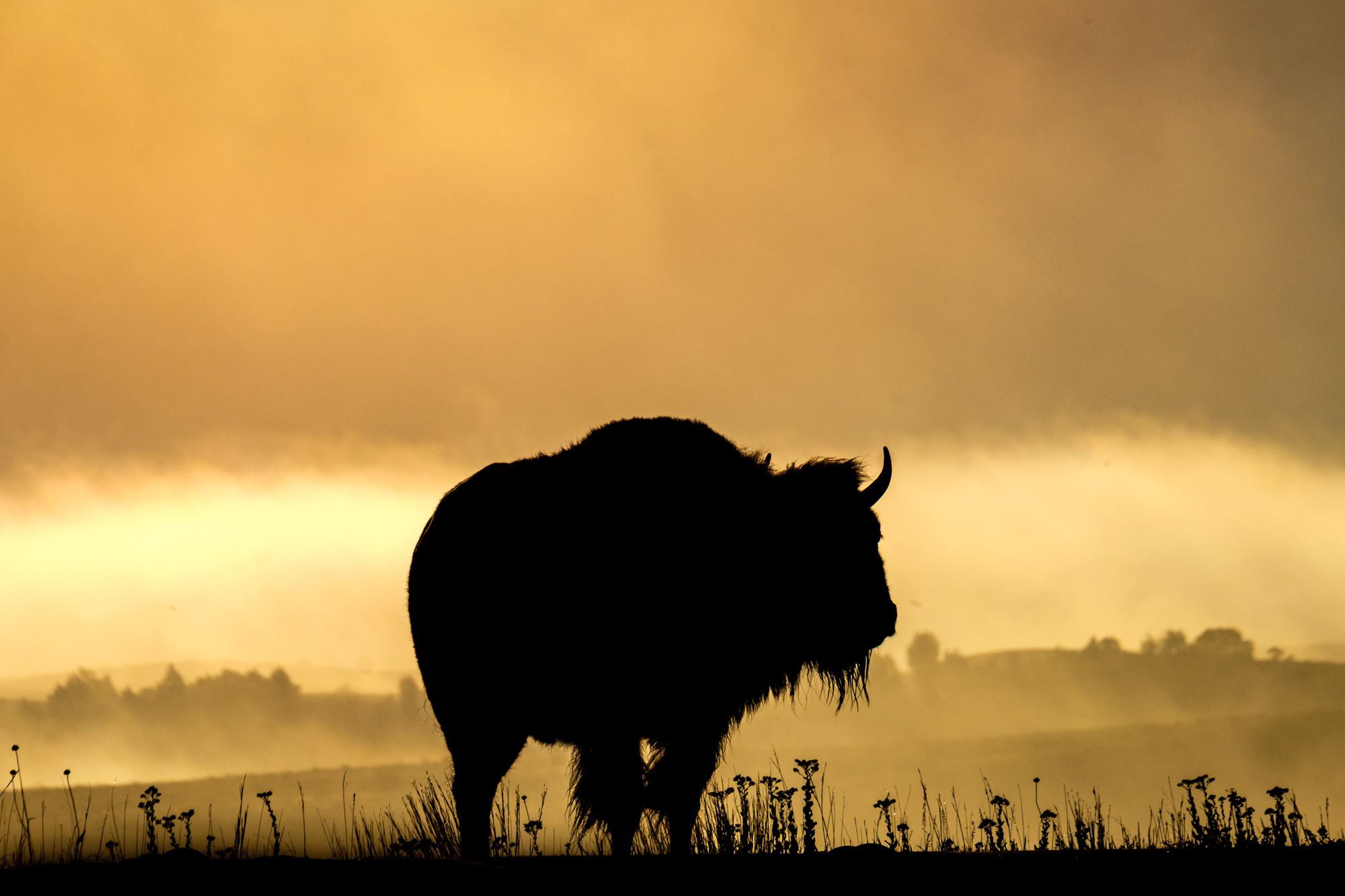 The park is also known for large herds of bison.