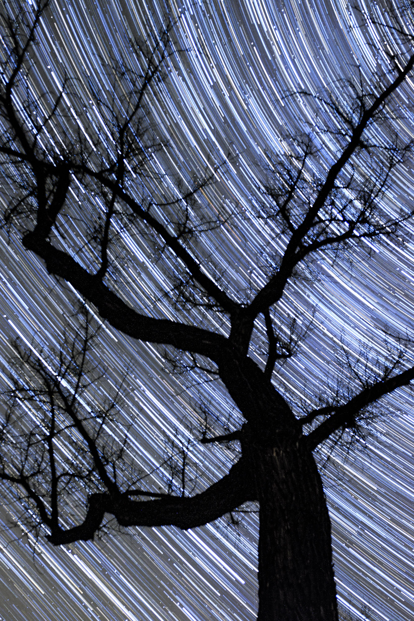Capturing star trails while camping is so much fun!