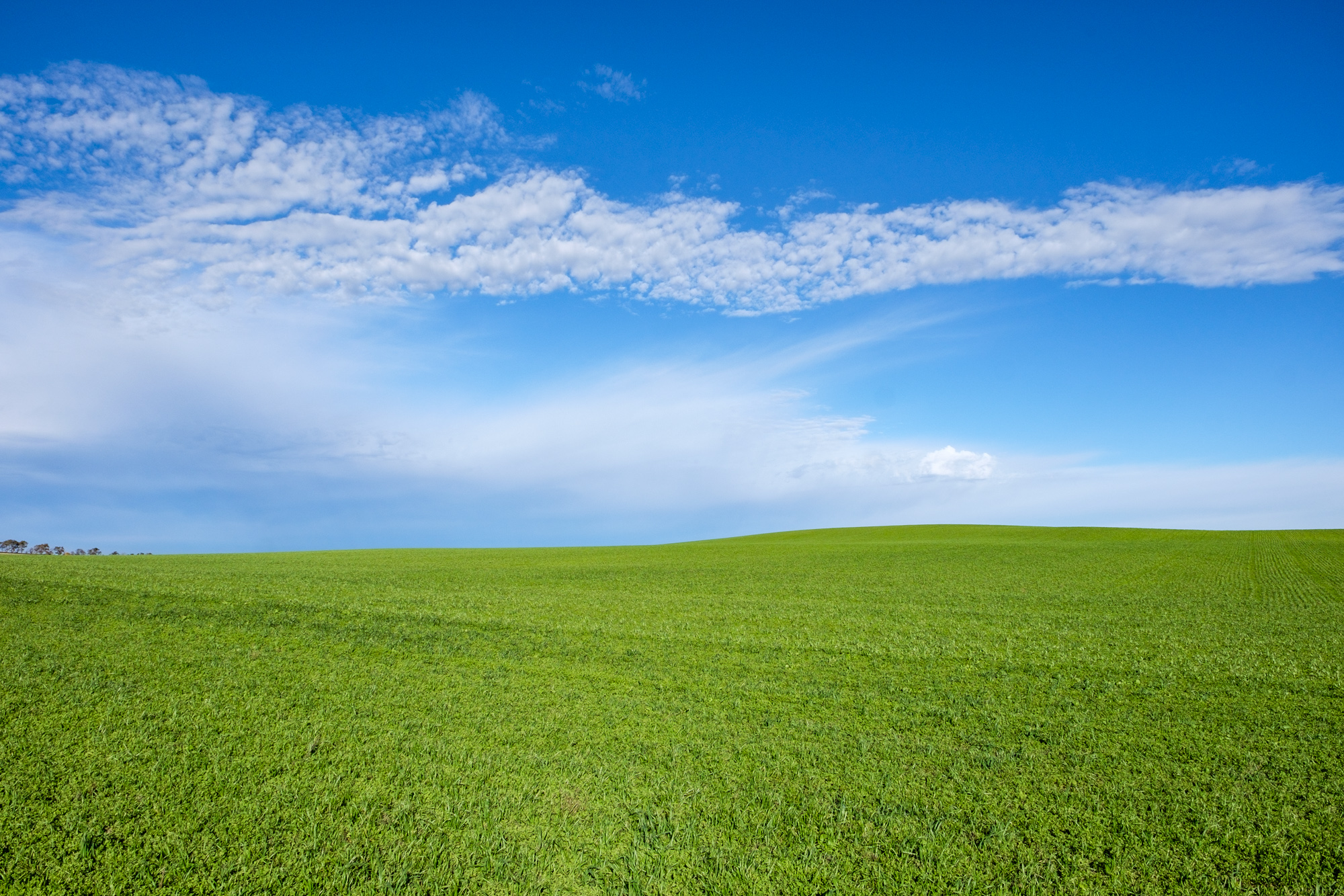 On the way to Elkhorn Ranch, we found the most beautiful green field.