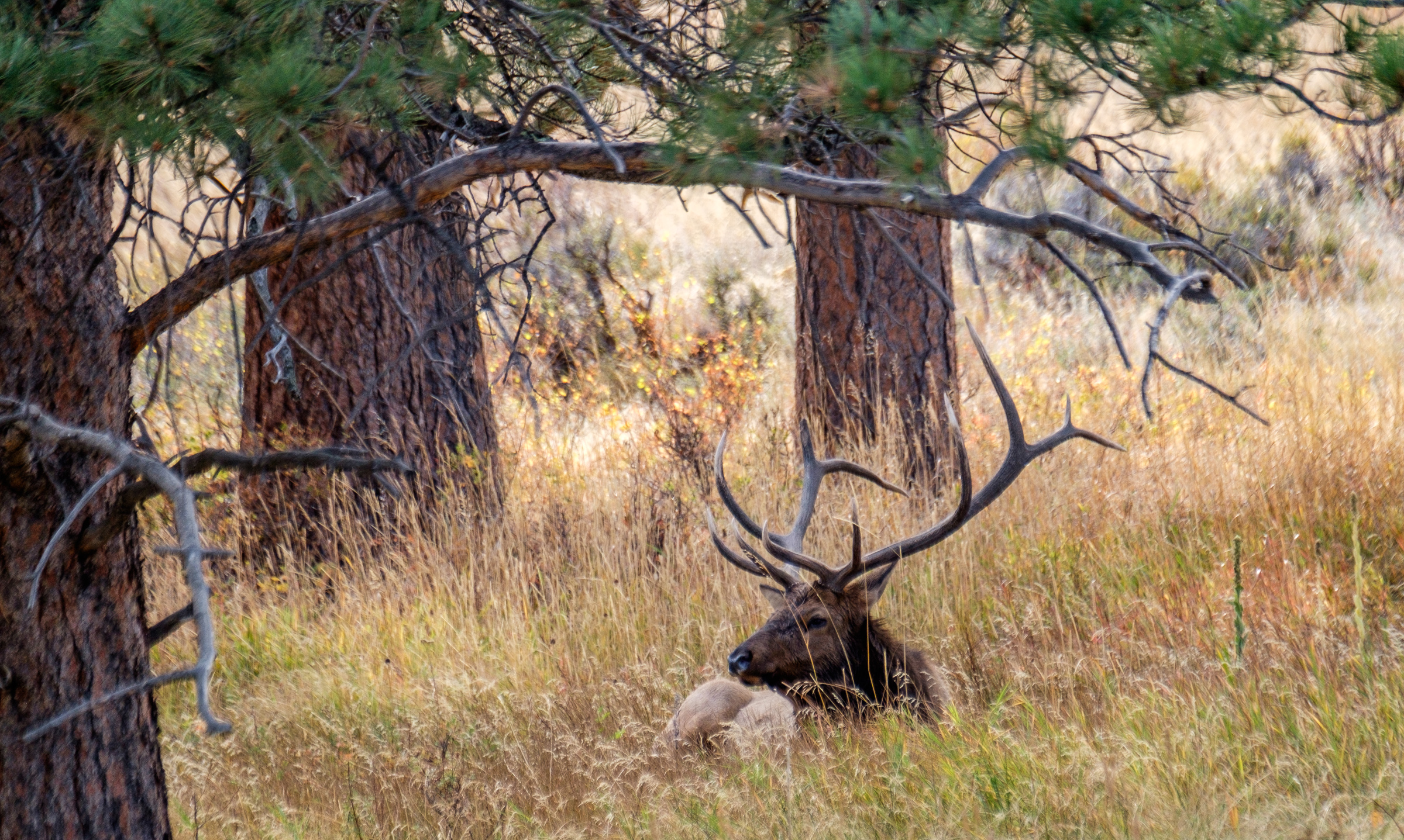 20161006-JI-Rocky Mountain National Park-_DSF2694.jpg