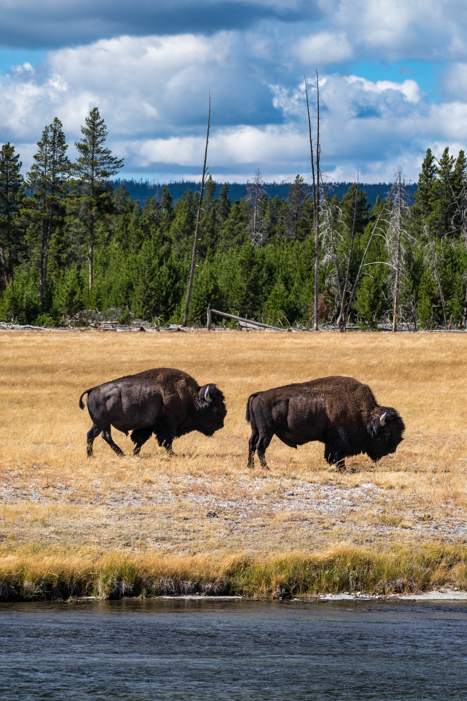 20160919-JI-Yellowstone National Park-_DSF6890-2.jpg