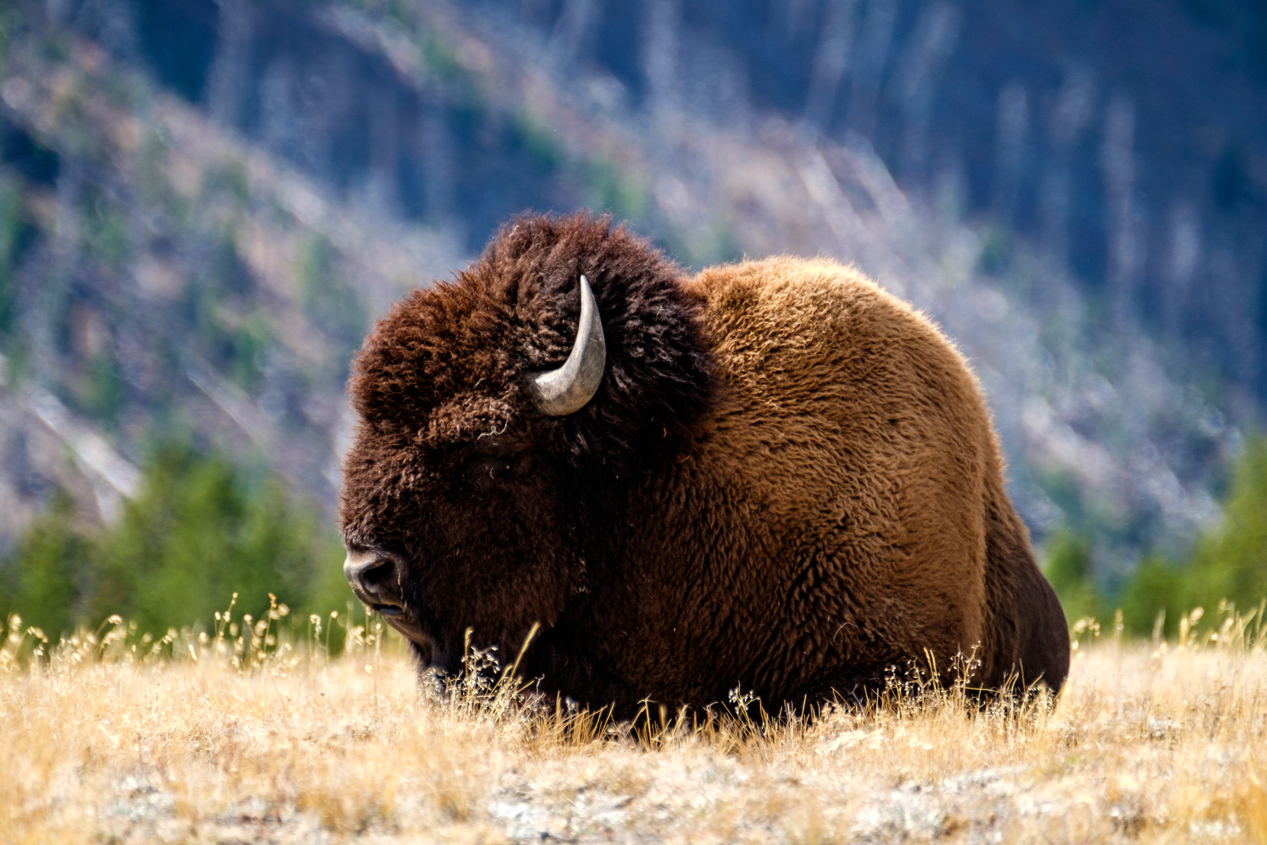 20160919-JI-Yellowstone National Park-_DSF6852-2.jpg