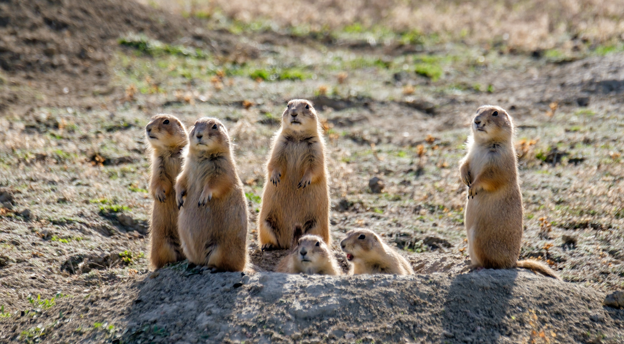Everyone stand at attention!Theodore Roosevelt National Park in North Dakota.