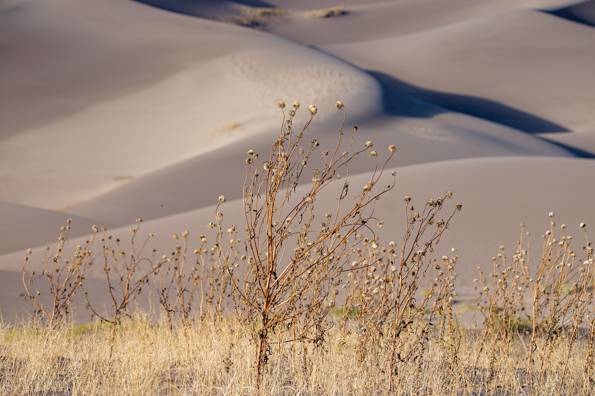 Great Sand Dunes National Park - 038.jpg