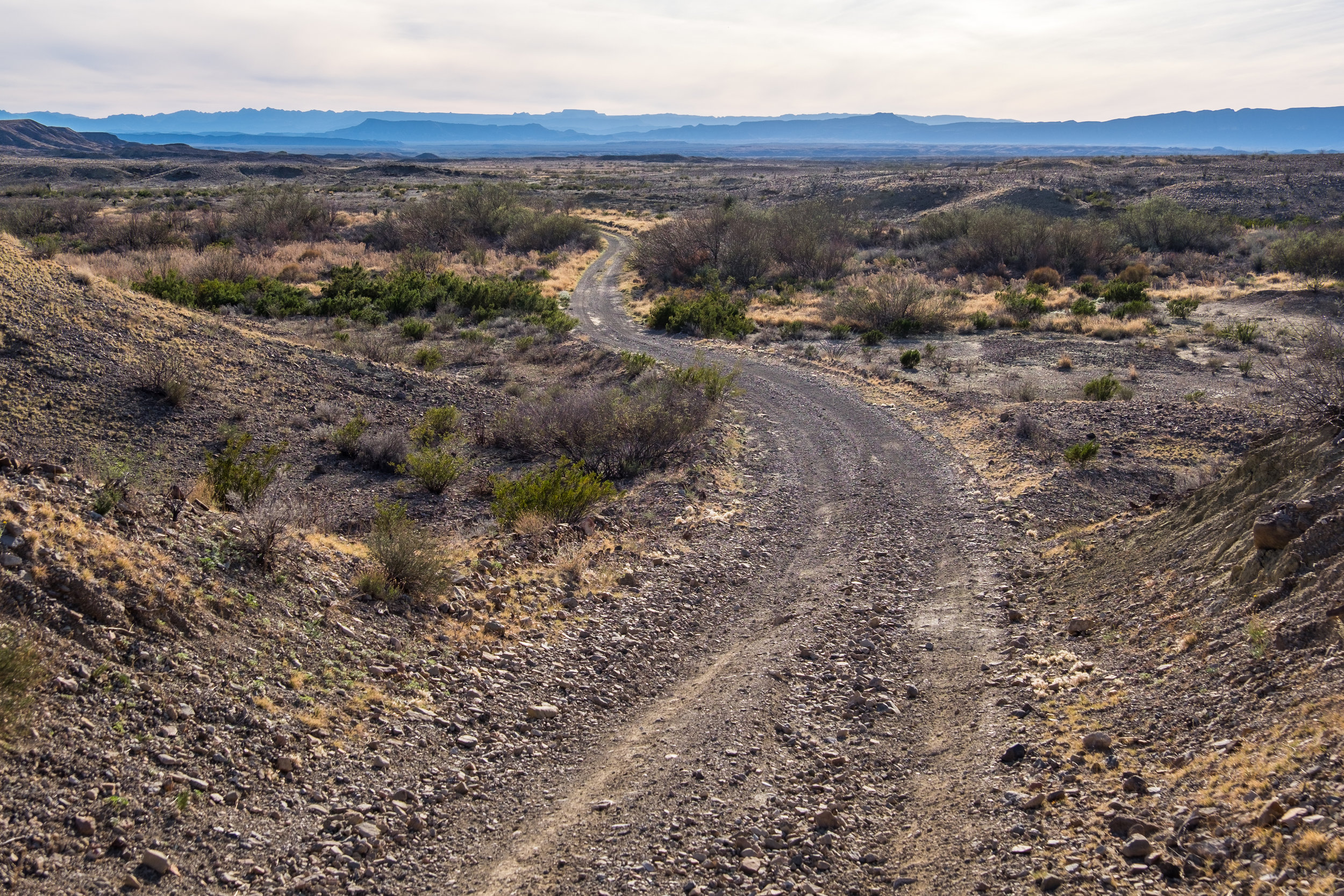 20160224-SP-Big Bend National Park-069-_DSF2749.jpg