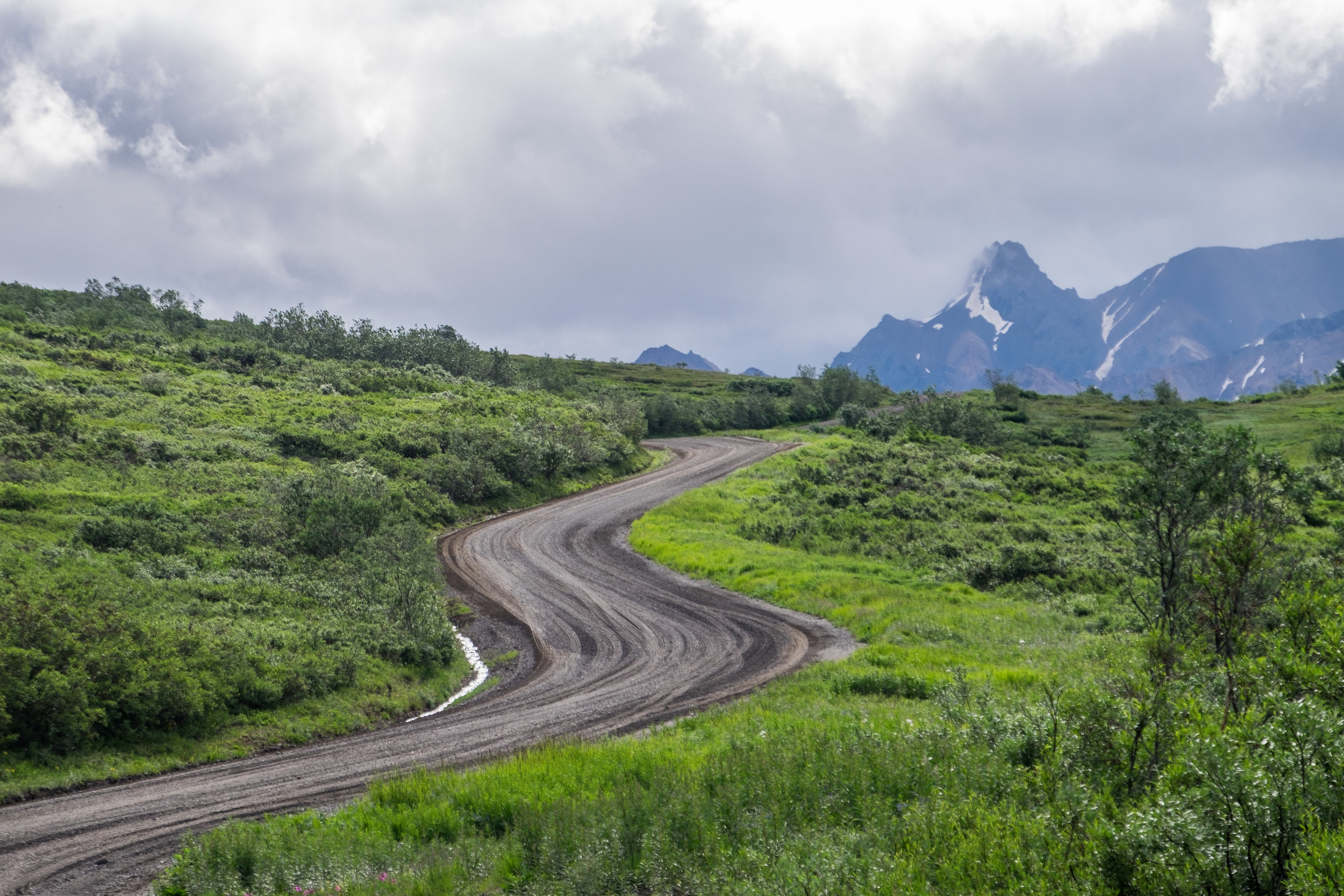 20160705-SP-Denali National Park-_DSF1533.jpg