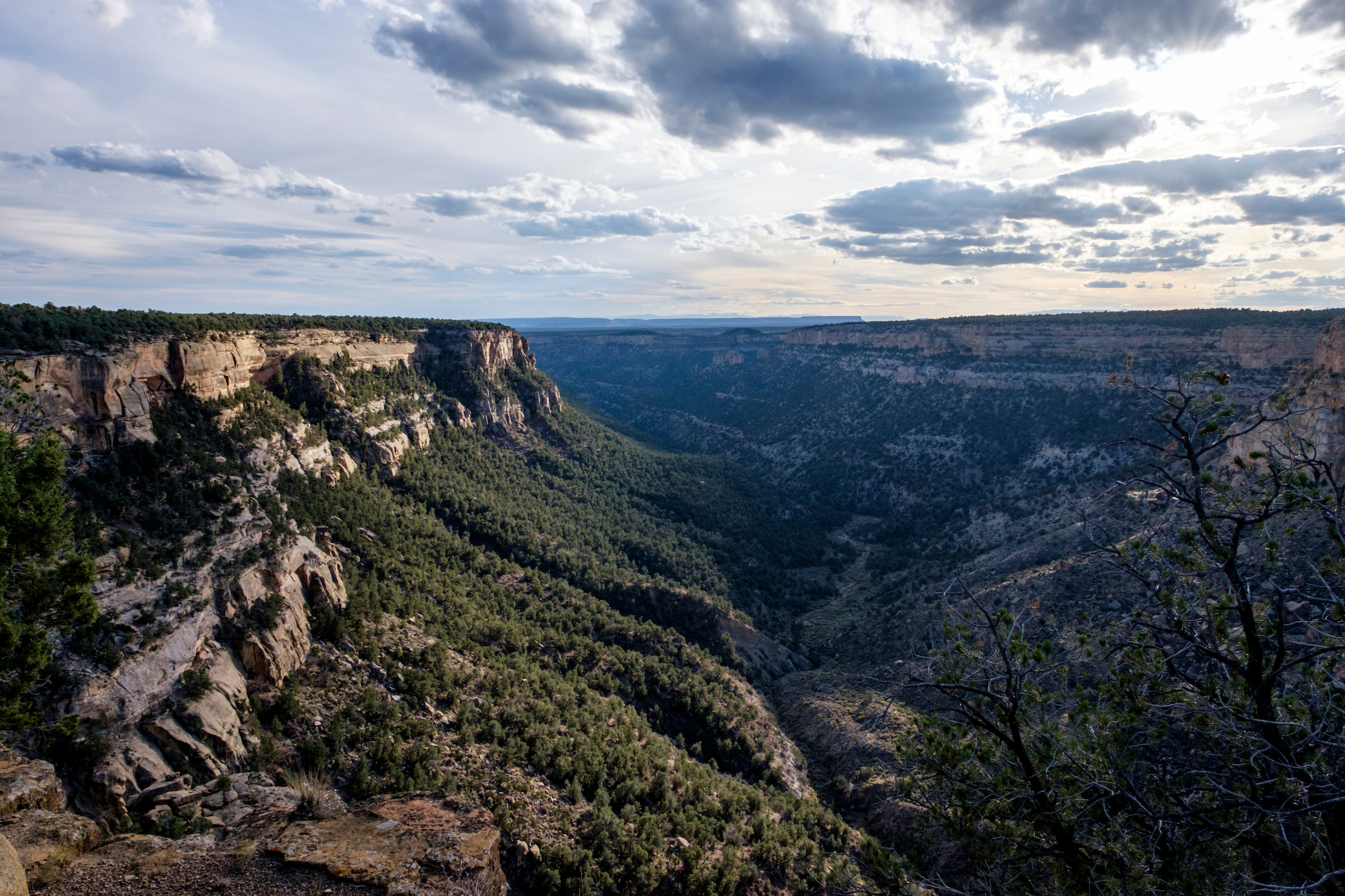 This park earned its name from the pinyon pine and juniper forests that blanket the ceiling and slopes of the Navajo Canyon.