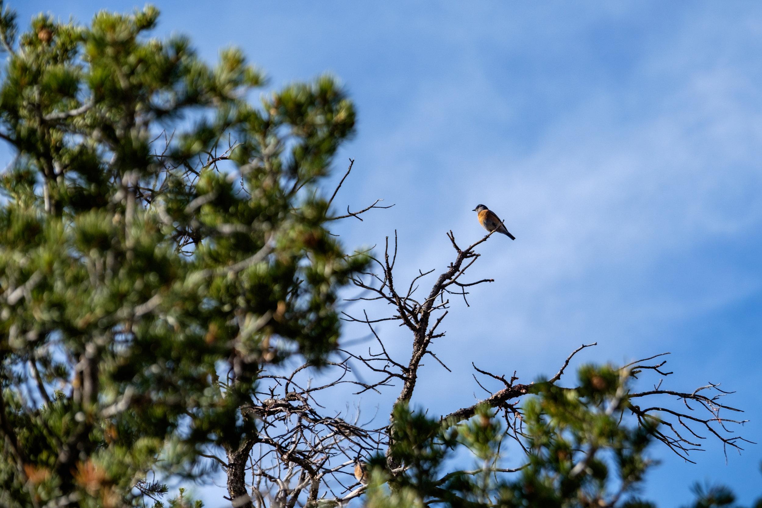 Mesa Verde National Park - 019.jpg