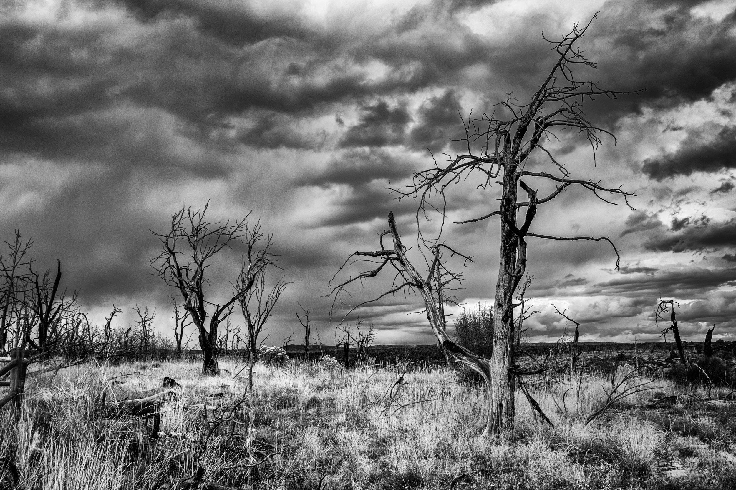 Mesa Verde National Park - 045.jpg