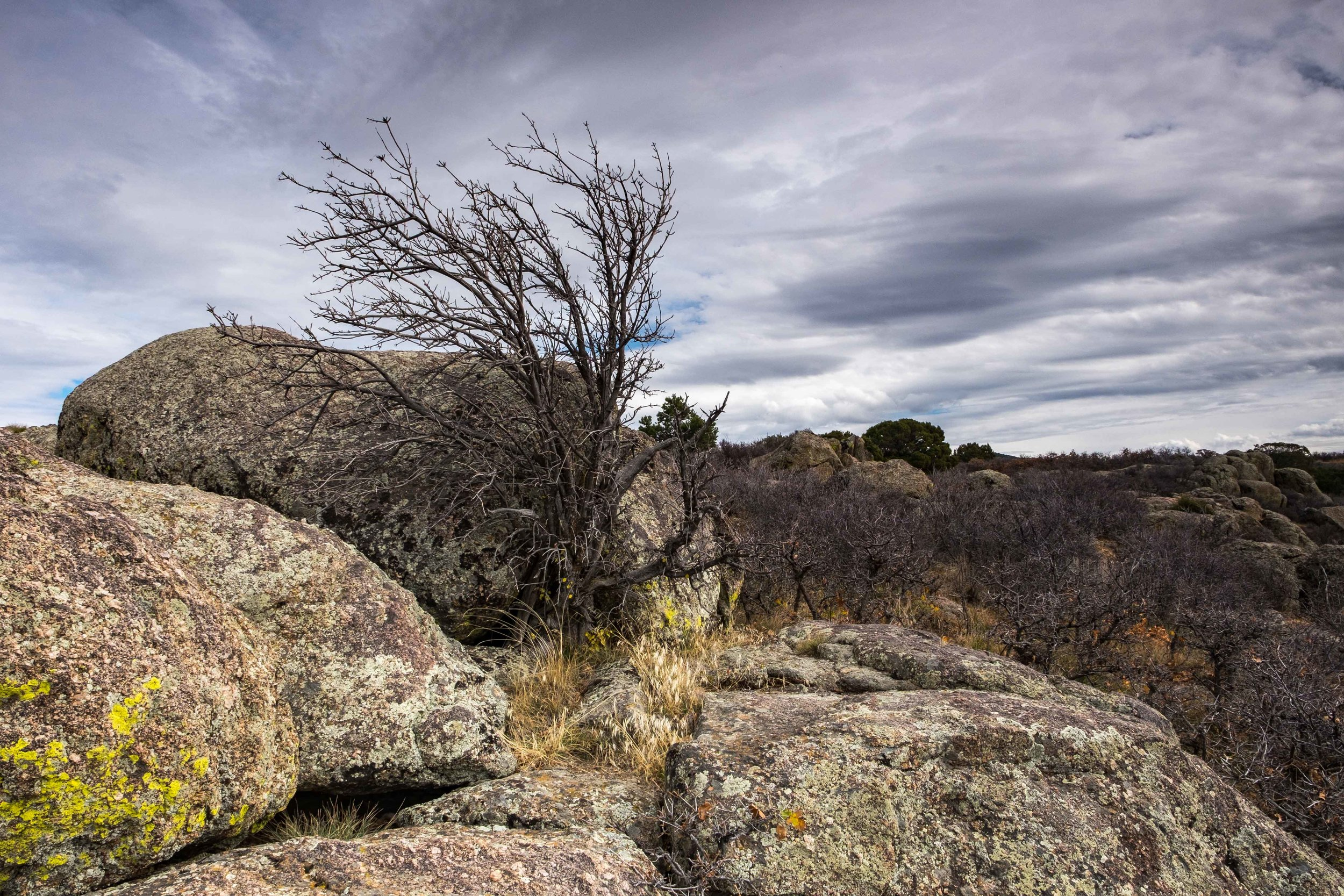 The surrounding rock and vegetation is also really interesting.