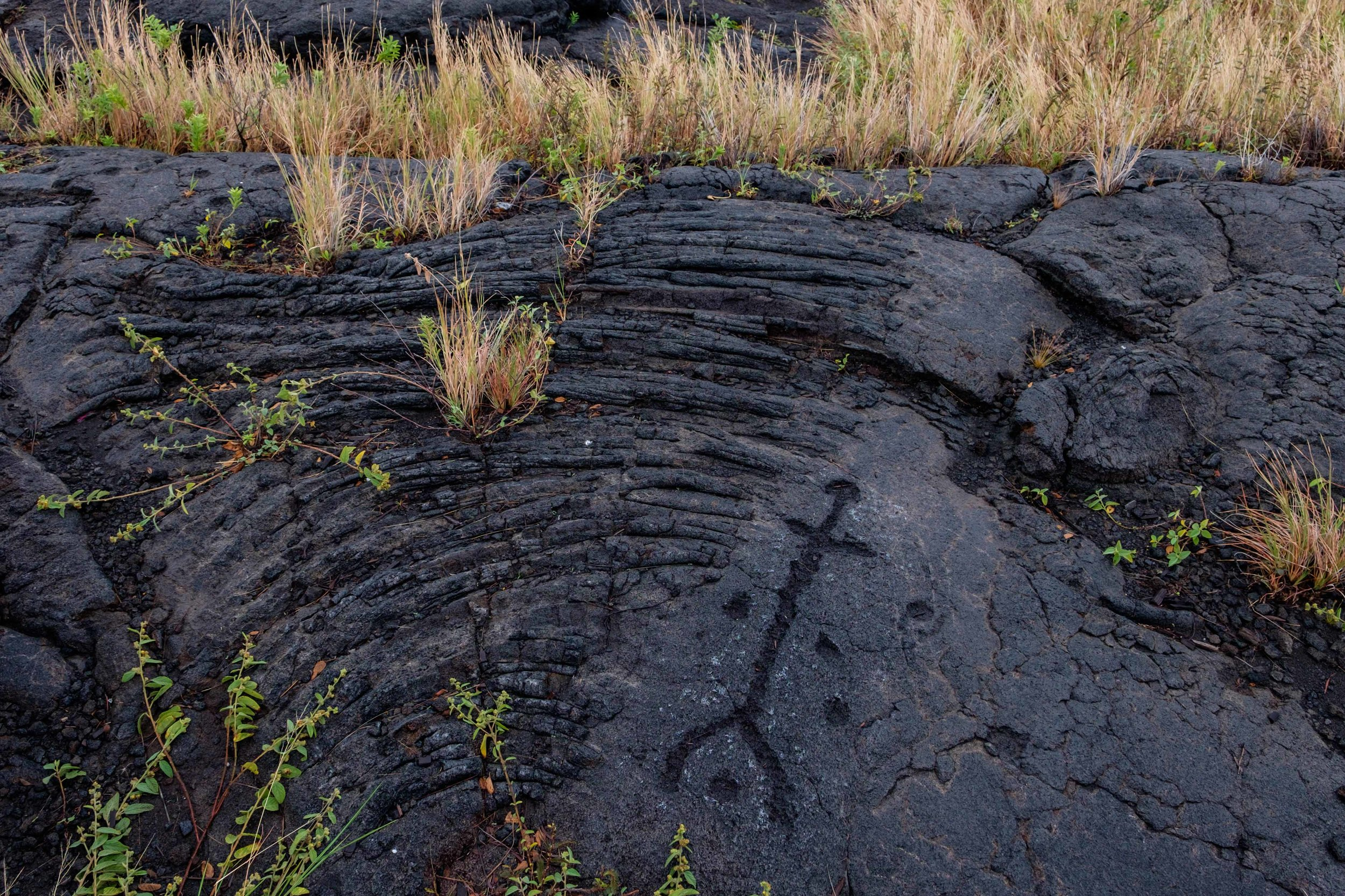 The petroglyphs have been carved on the lava itself, and have many shapes, including that of the human figure.