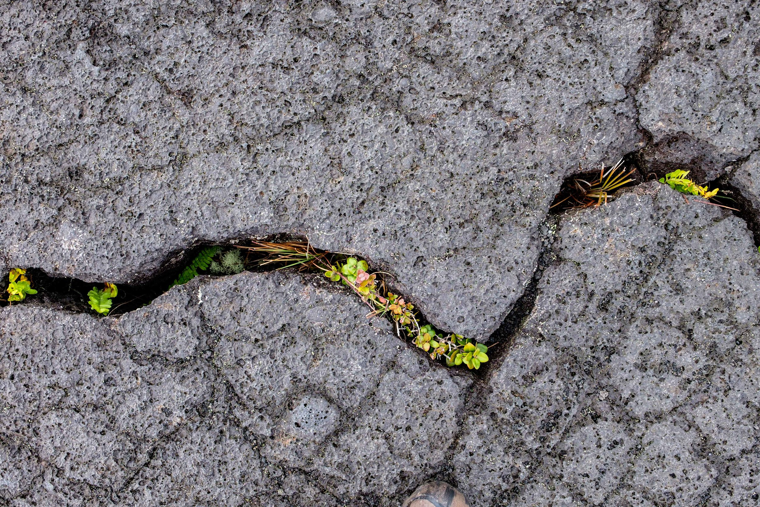 Life growing from inside the hardened lava.
