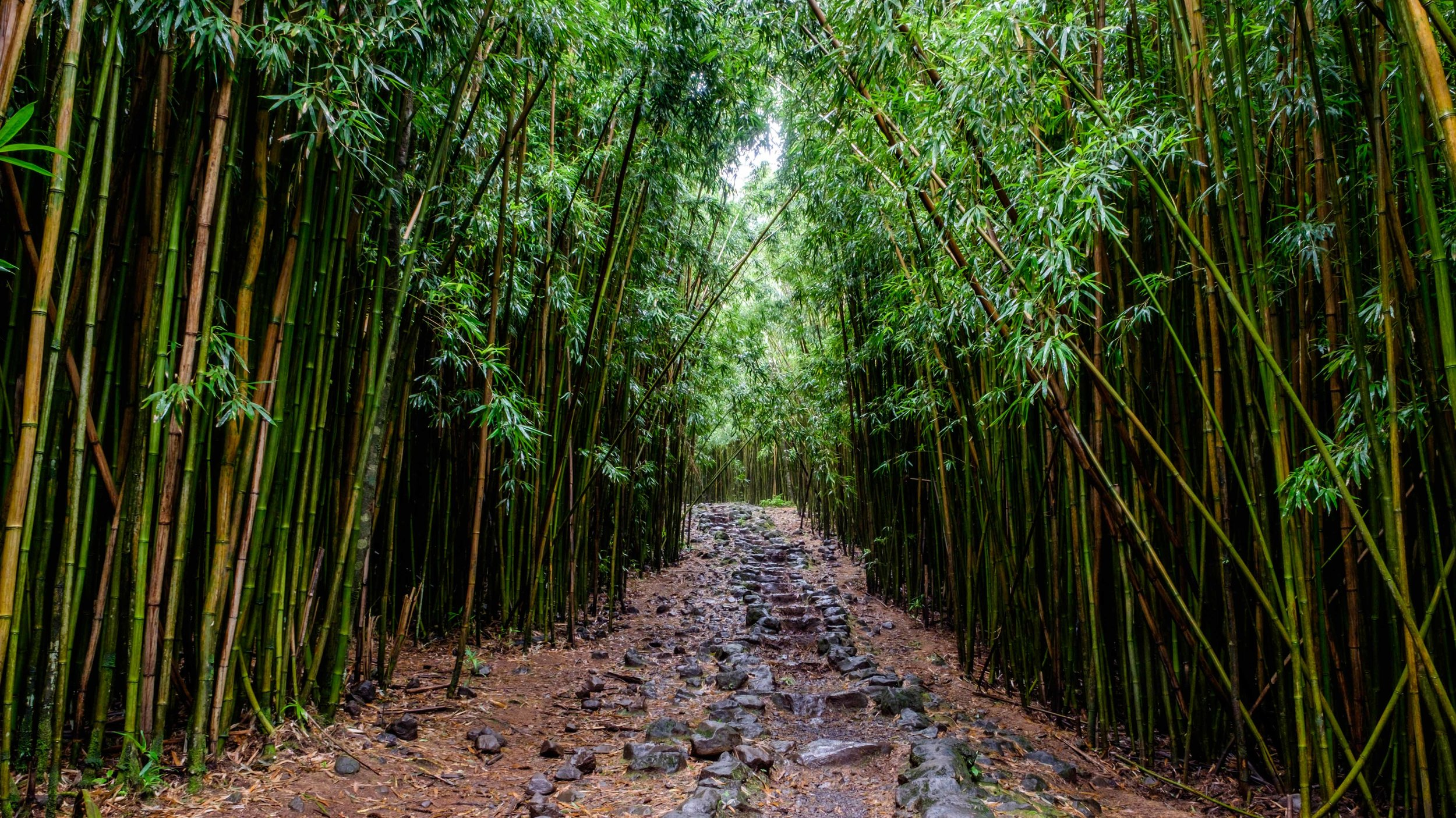 Walking through ancient bamboo.