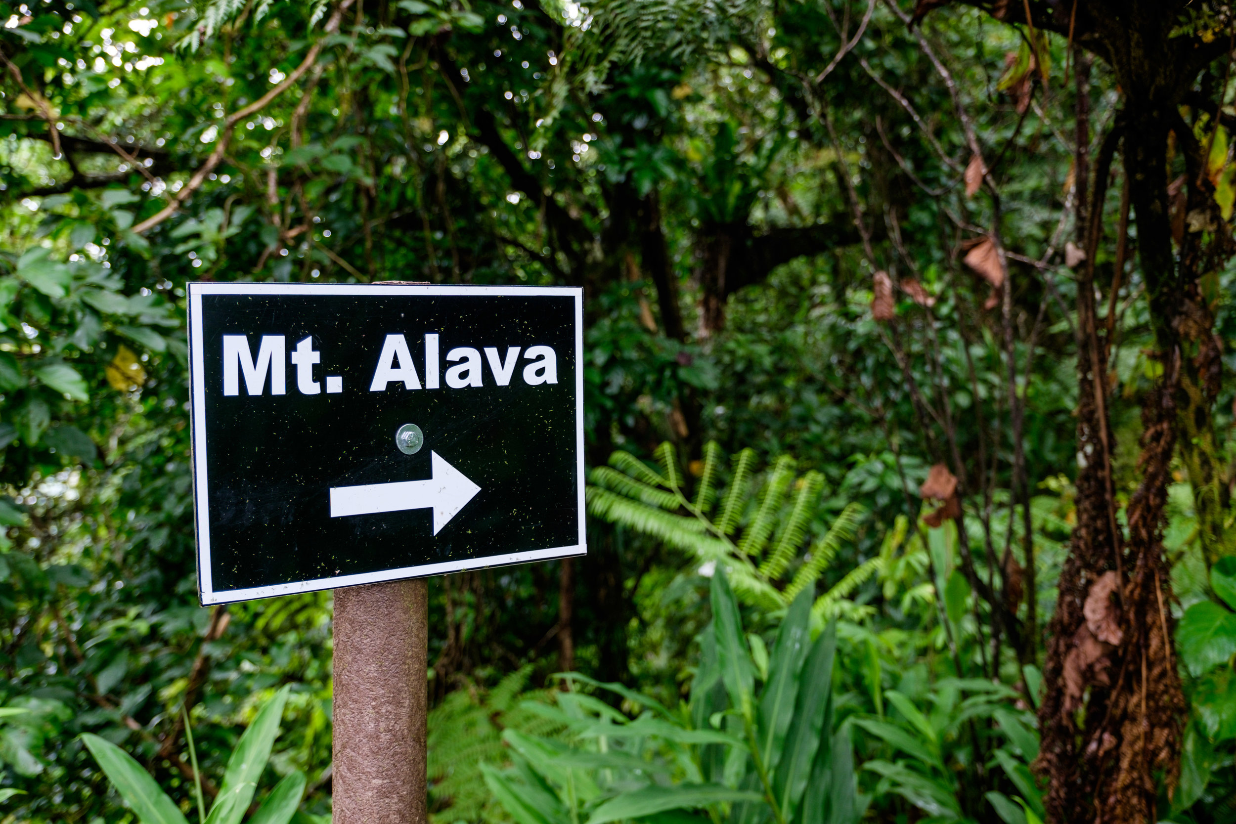 Along the Mt. Alava trail network on Pago Pago.