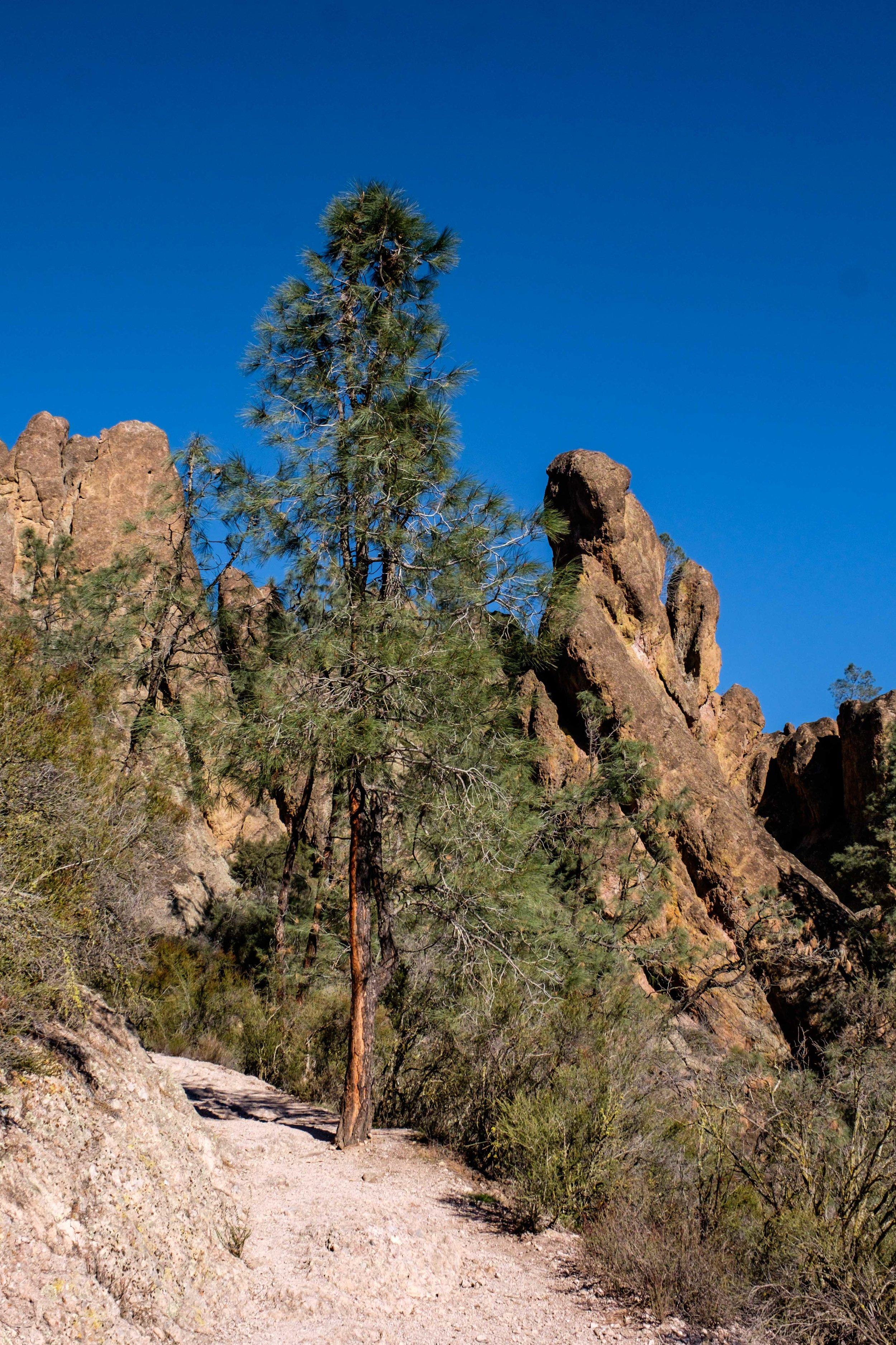 Pinnacles National Park - 032.jpg