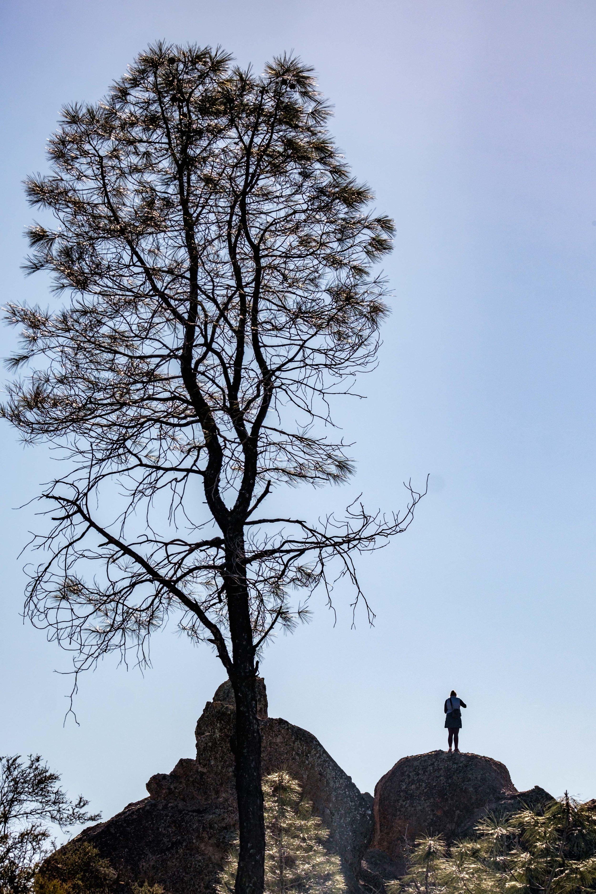 Pinnacles National Park - 036.jpg