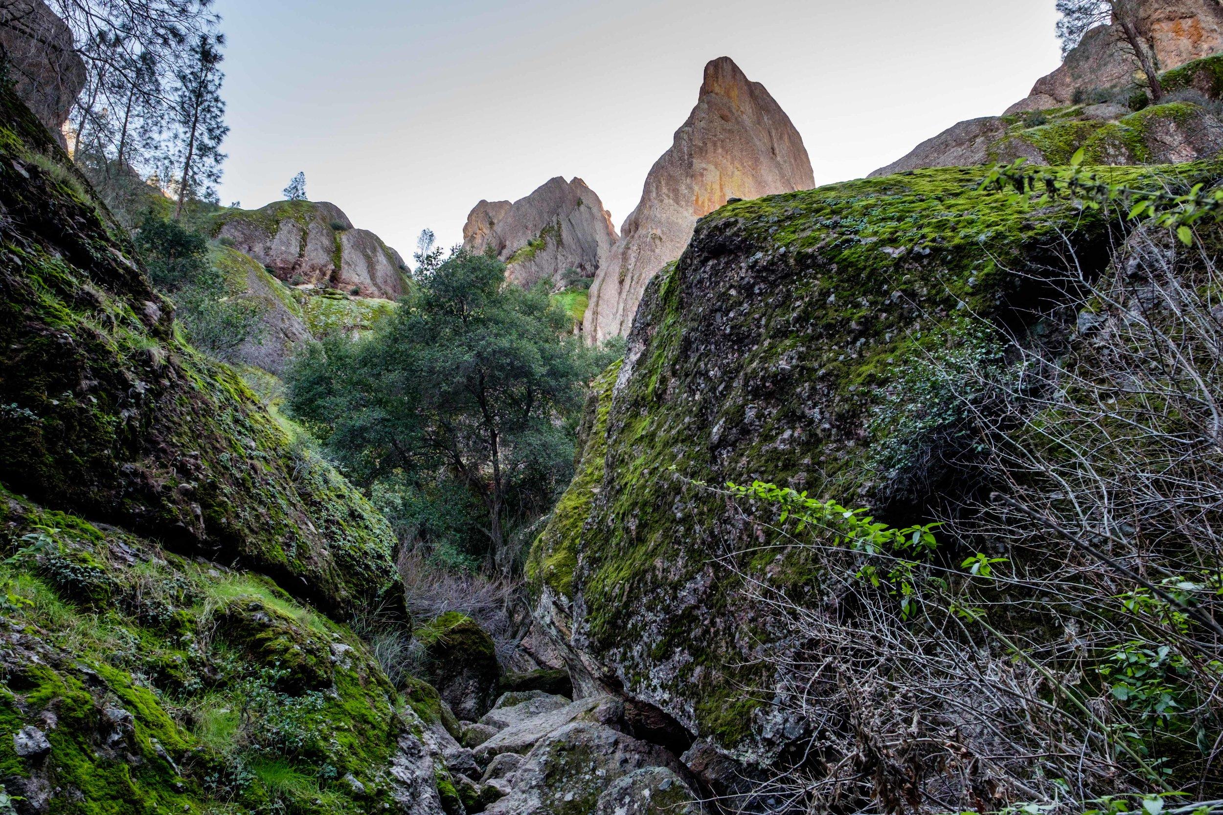 Pinnacles National Park - 057.jpg