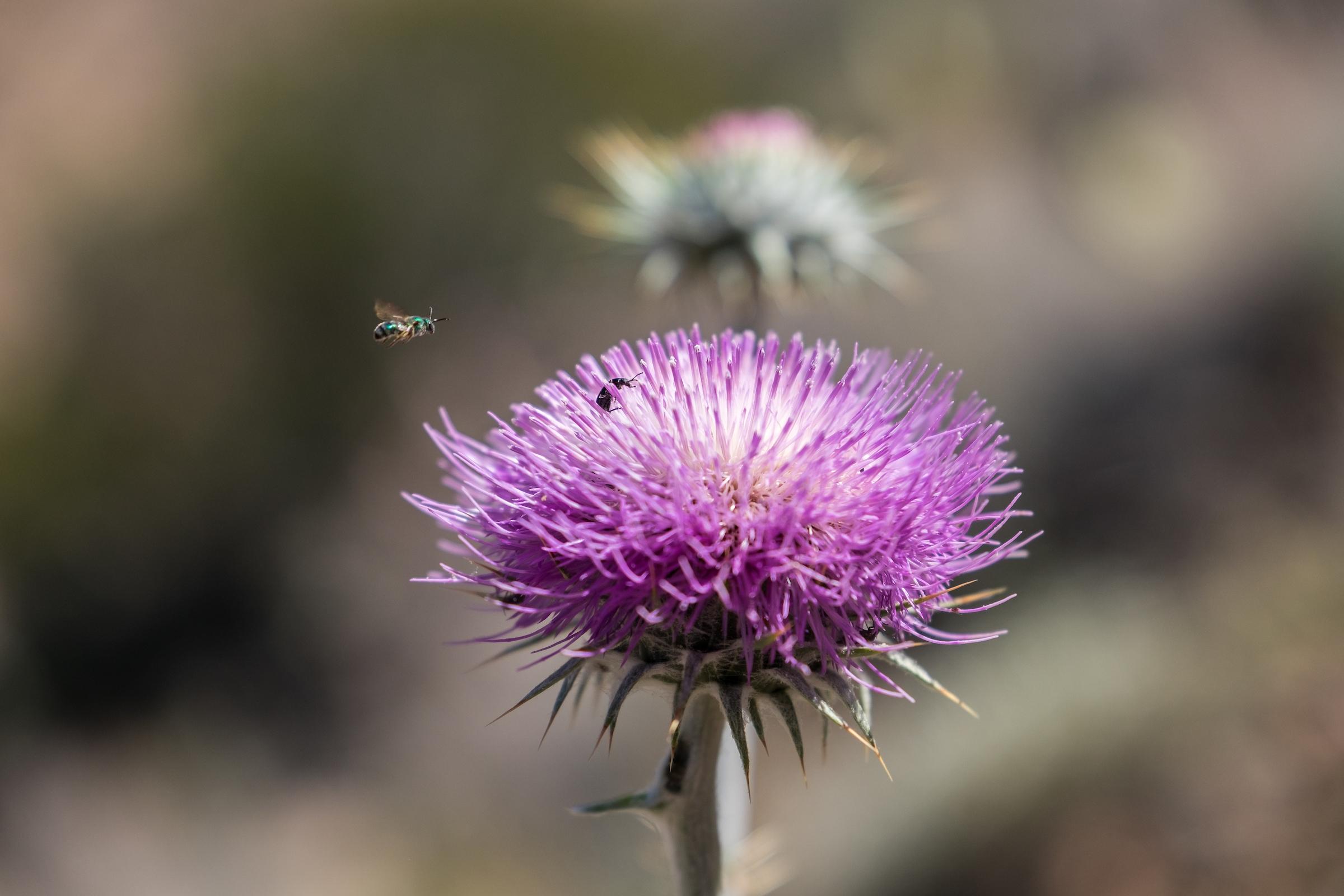 Desert wildflowers in Arizona