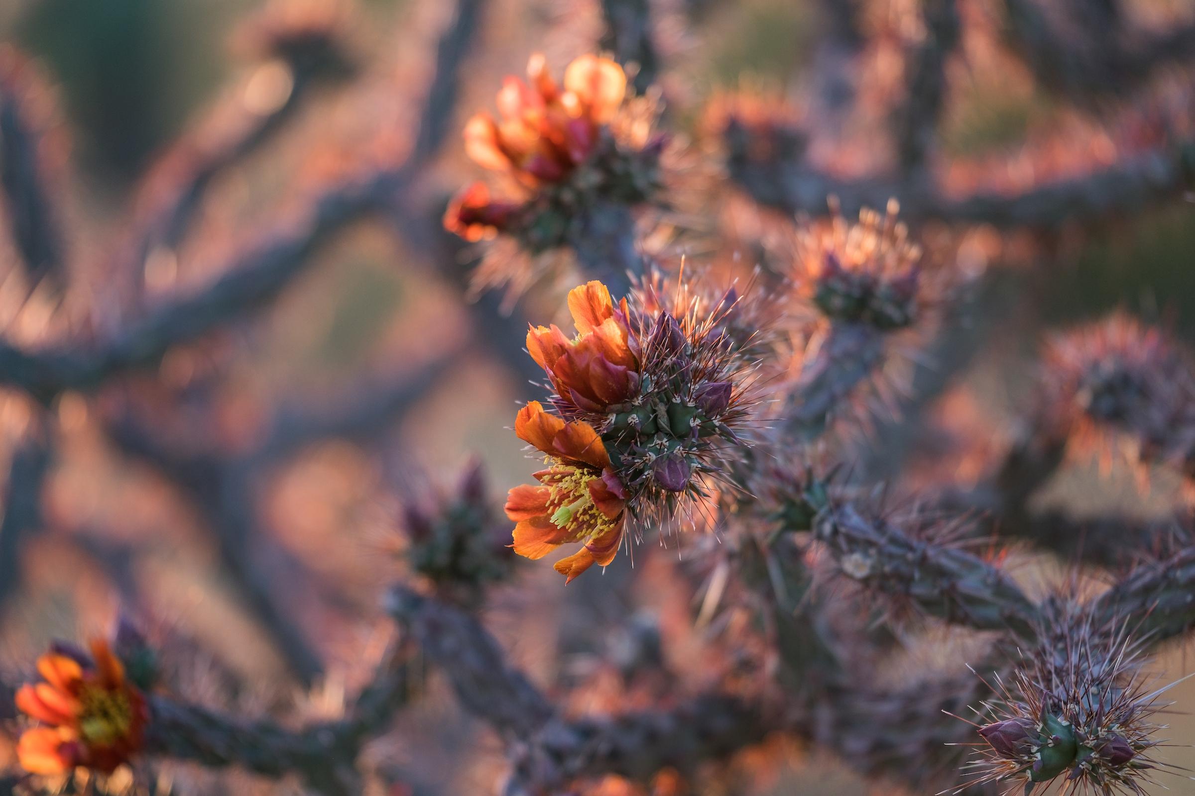 20160322-JI-Saguaro National Park-_DSF8552.jpg