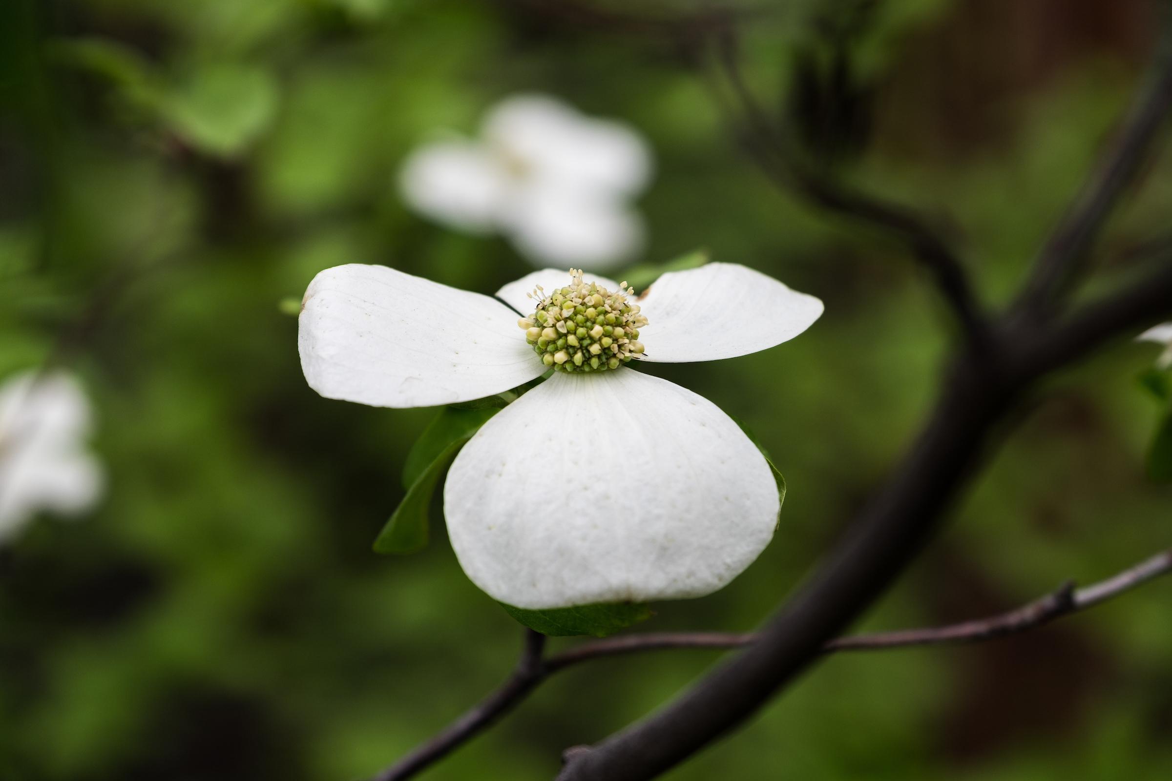Ansel Adams' favorite flower!