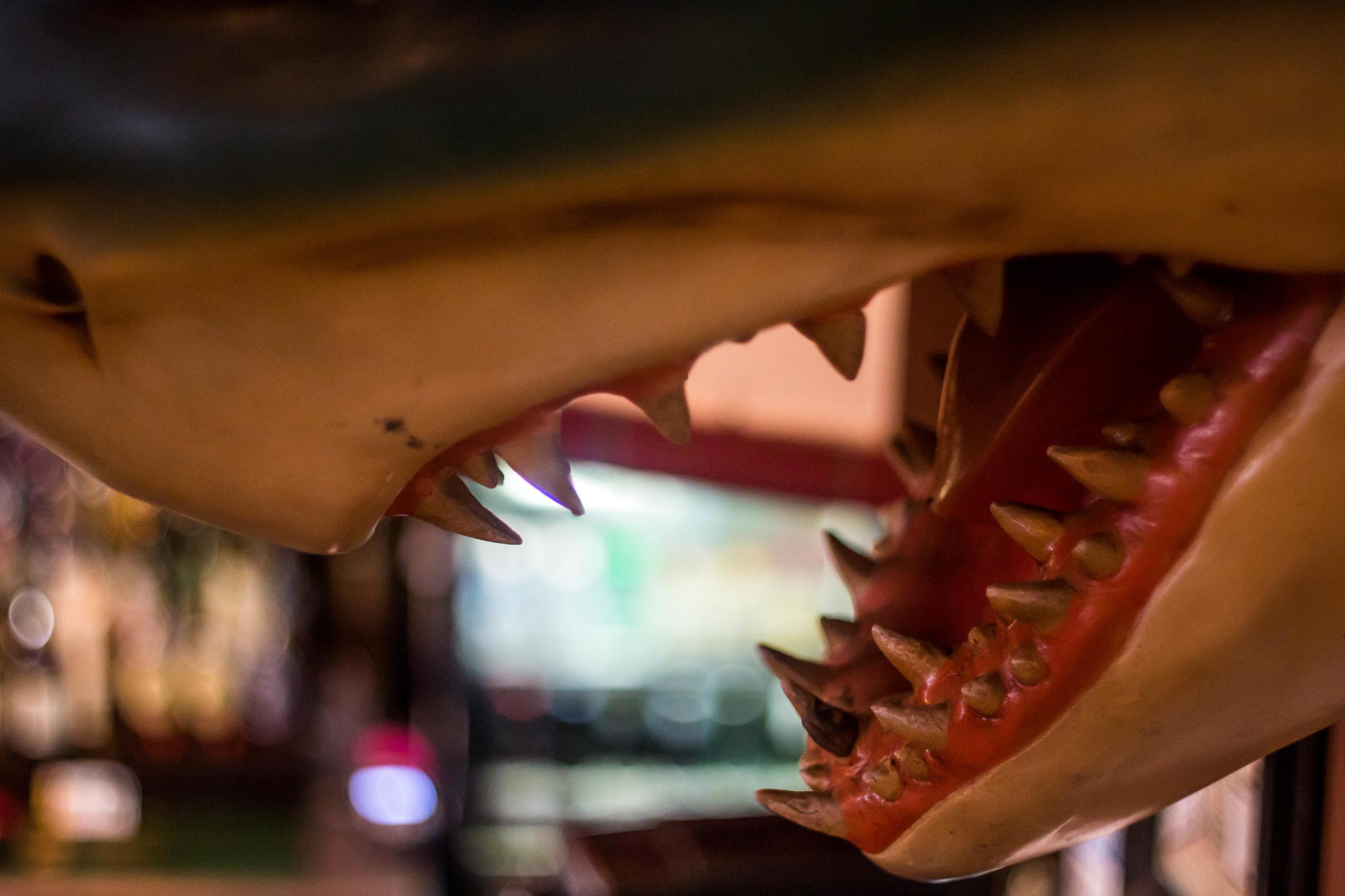 birdies shark (3).jpg