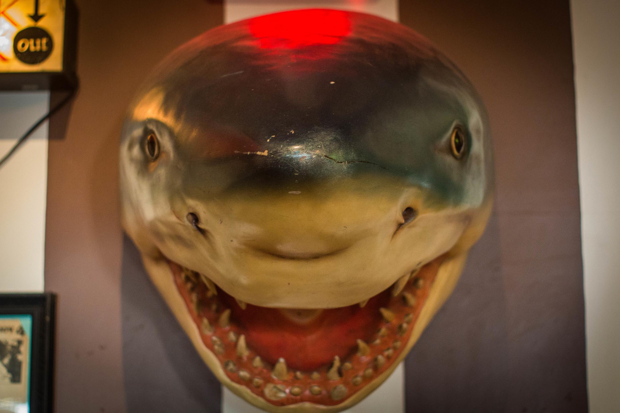 birdies shark (5).jpg