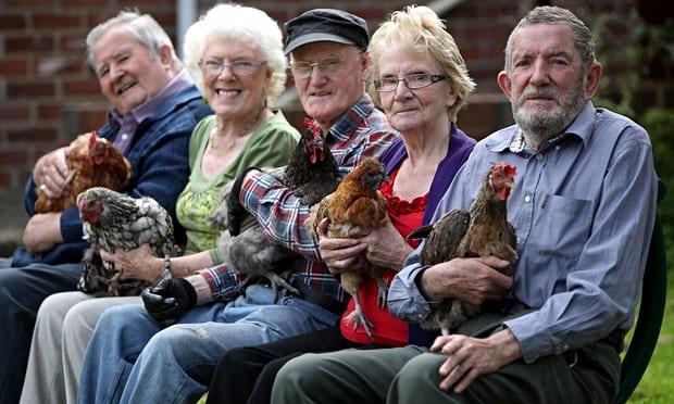 older-people-hens-008.jpg