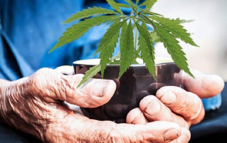 1-marijuana-pic-792x500.jpg