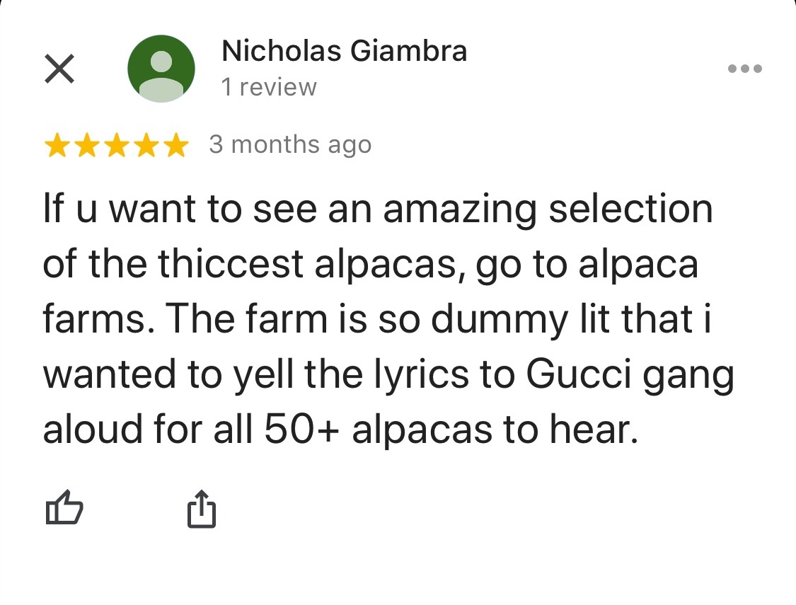 """If you want to see an amazing selection of the thiccest alpacas, go to alpaca farms. The farm is so dummy lit that I wanted to yell the lyrics to Gucci gang aloud for all 50+ alpacas to hear.�"