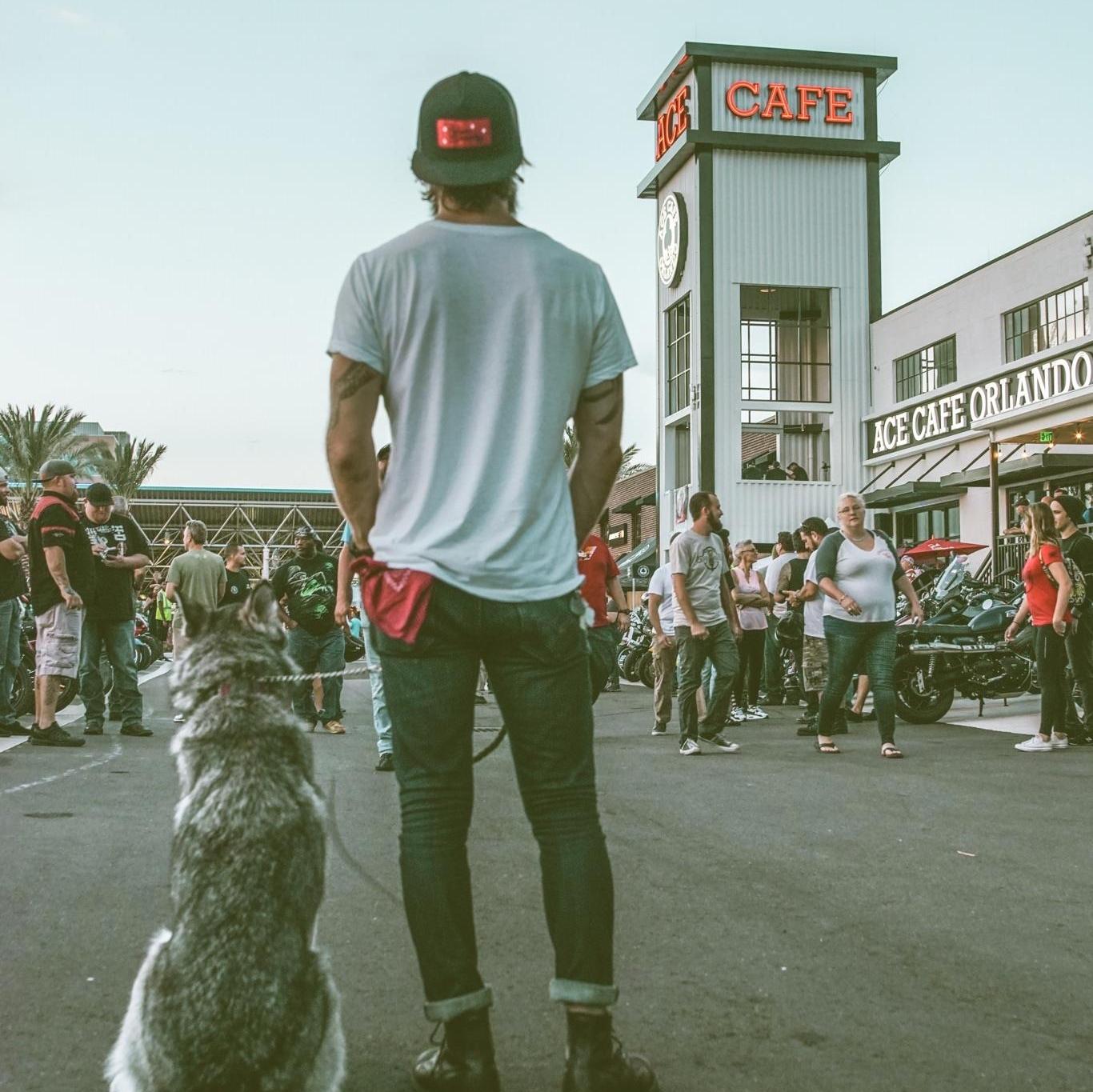 Ace Dog.jpg