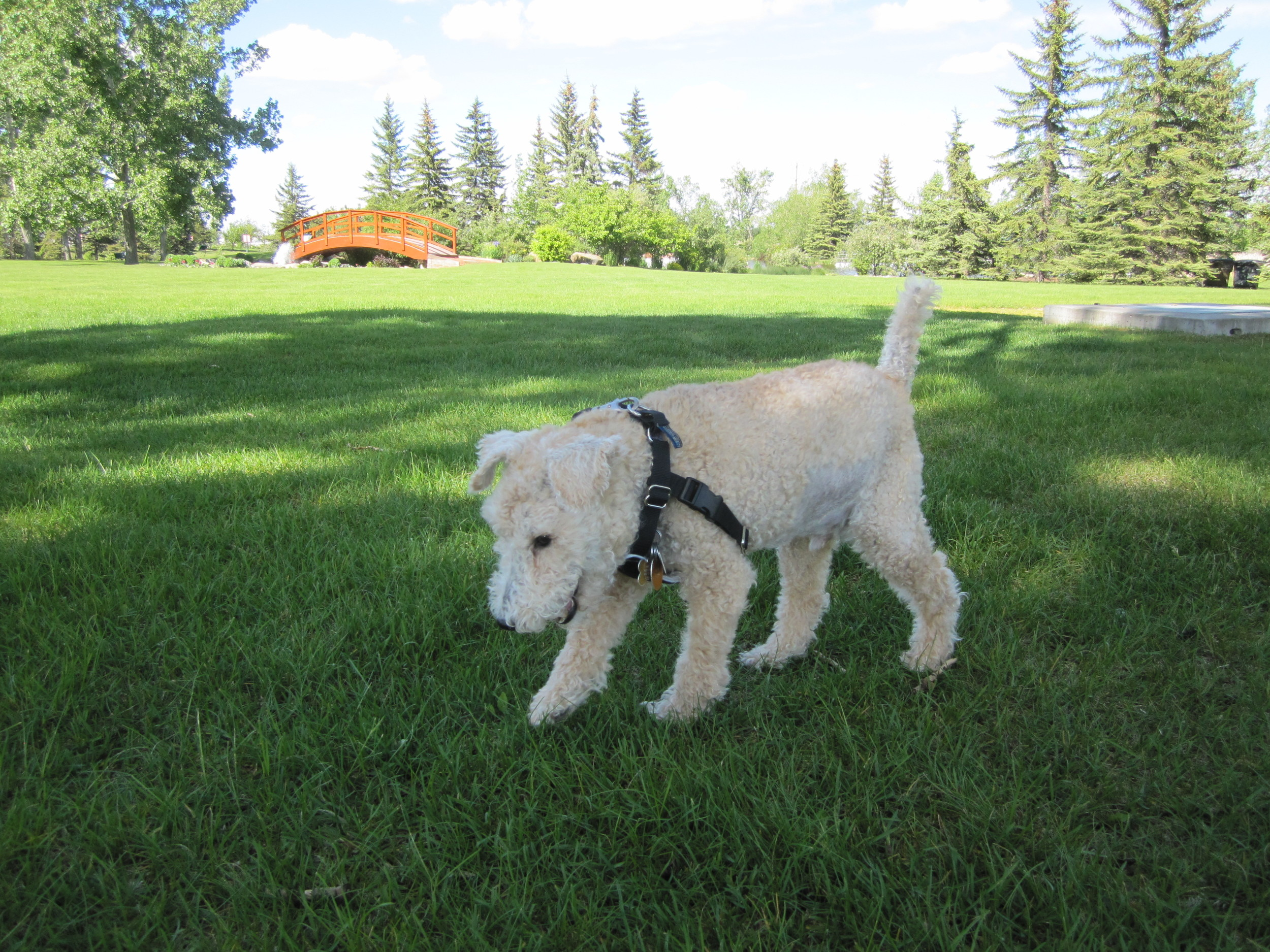 Visiting Spruce Meadows