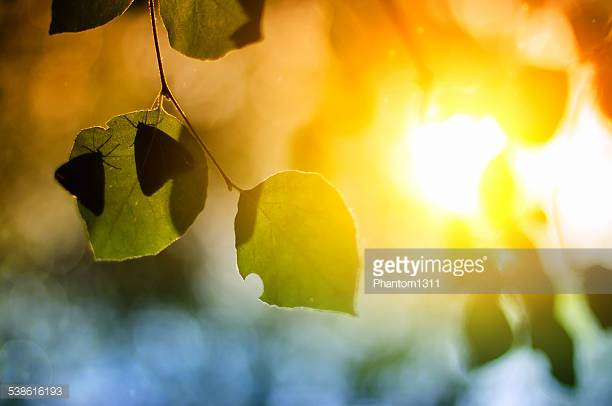 Photo by Phantom1311/iStock / Getty Images