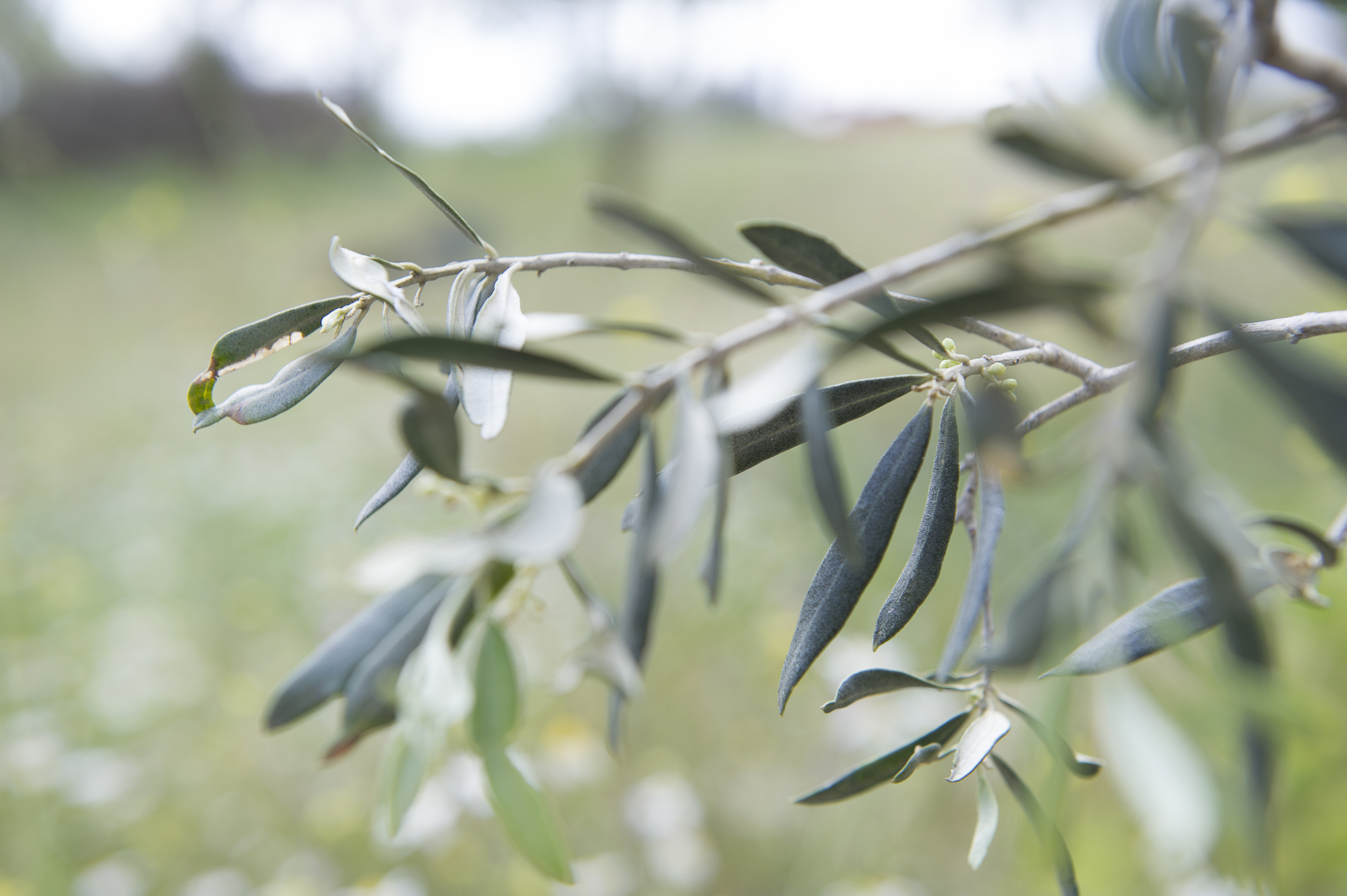 all about the olive-8.jpg