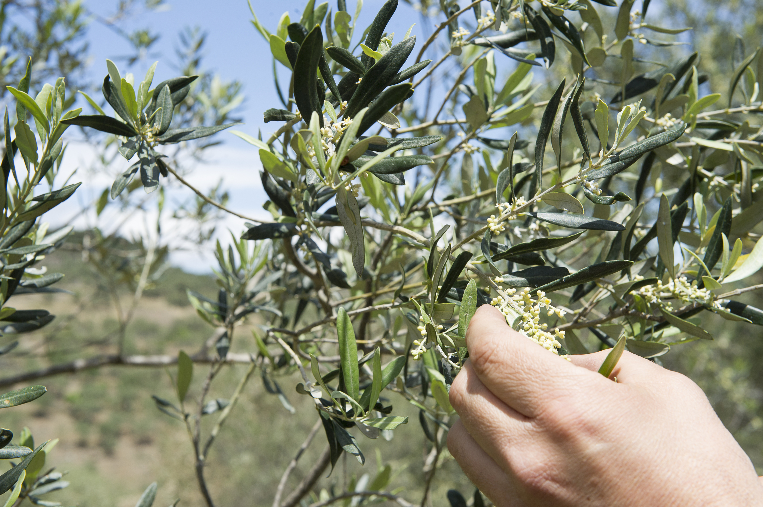 all about the olive-20.jpg