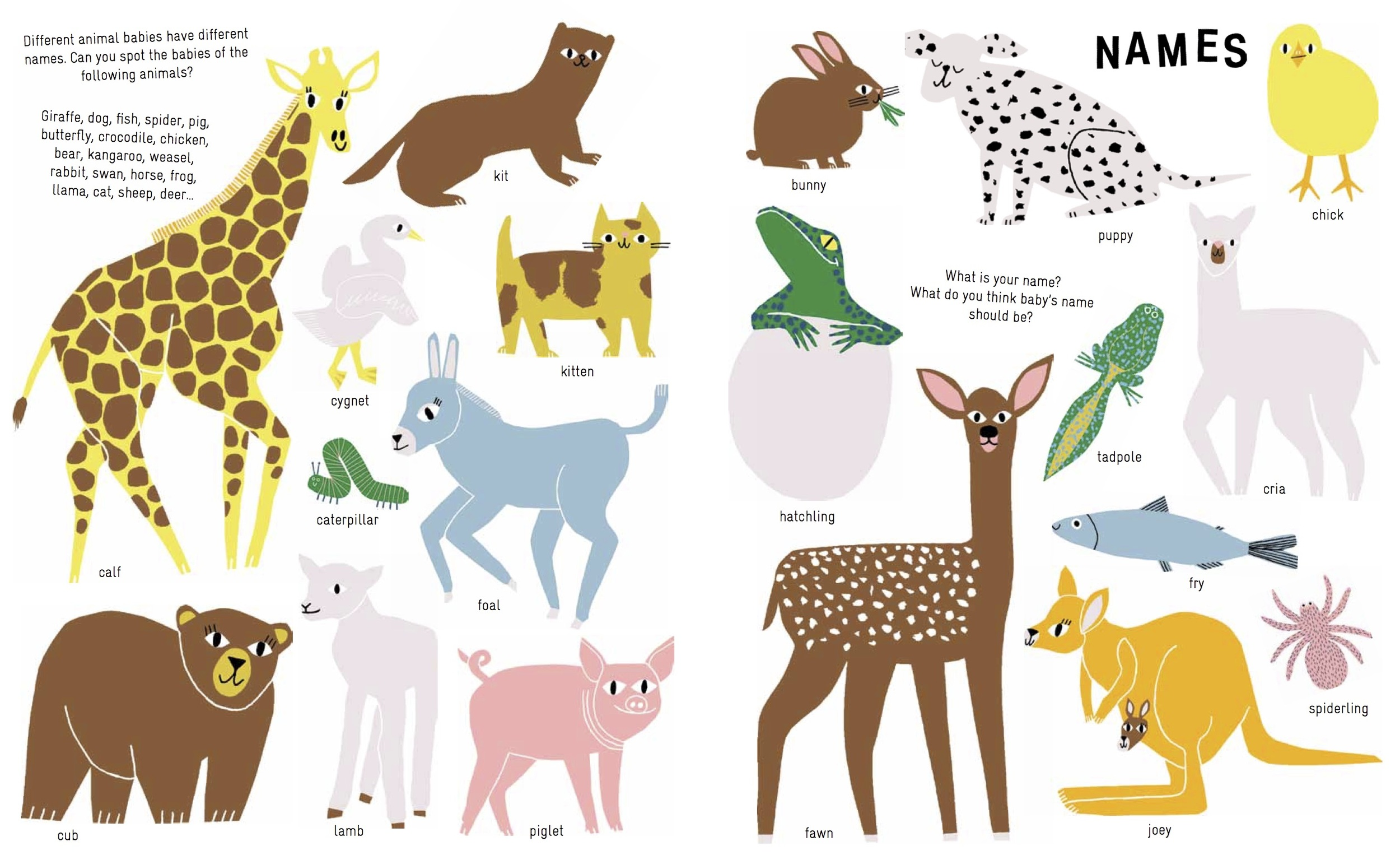 baby animals.jpg