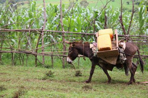 WaterAid, Ethiopia Oromia, Donkeys to transport water - Behailu Shiferaw.jpg