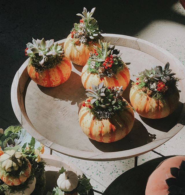 Yesterday there was an adorable assortment of fall, vintage, and artist work in the café. I couldn't get over how cute these pumpkin planters are!
