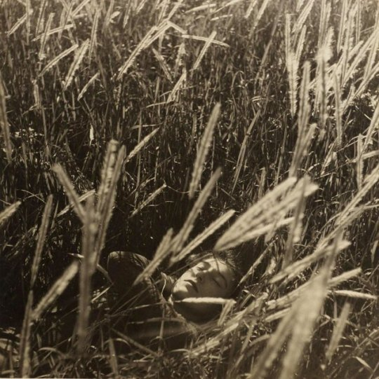 olive cotton in wheat fields- max dupain