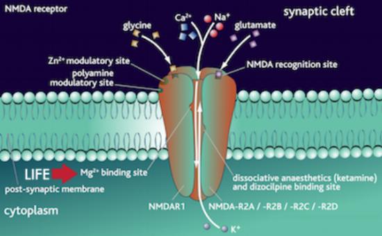 Recettori NMDA e carenza di Magnesio... la causa dell'Alzheimer e del Parkinson?