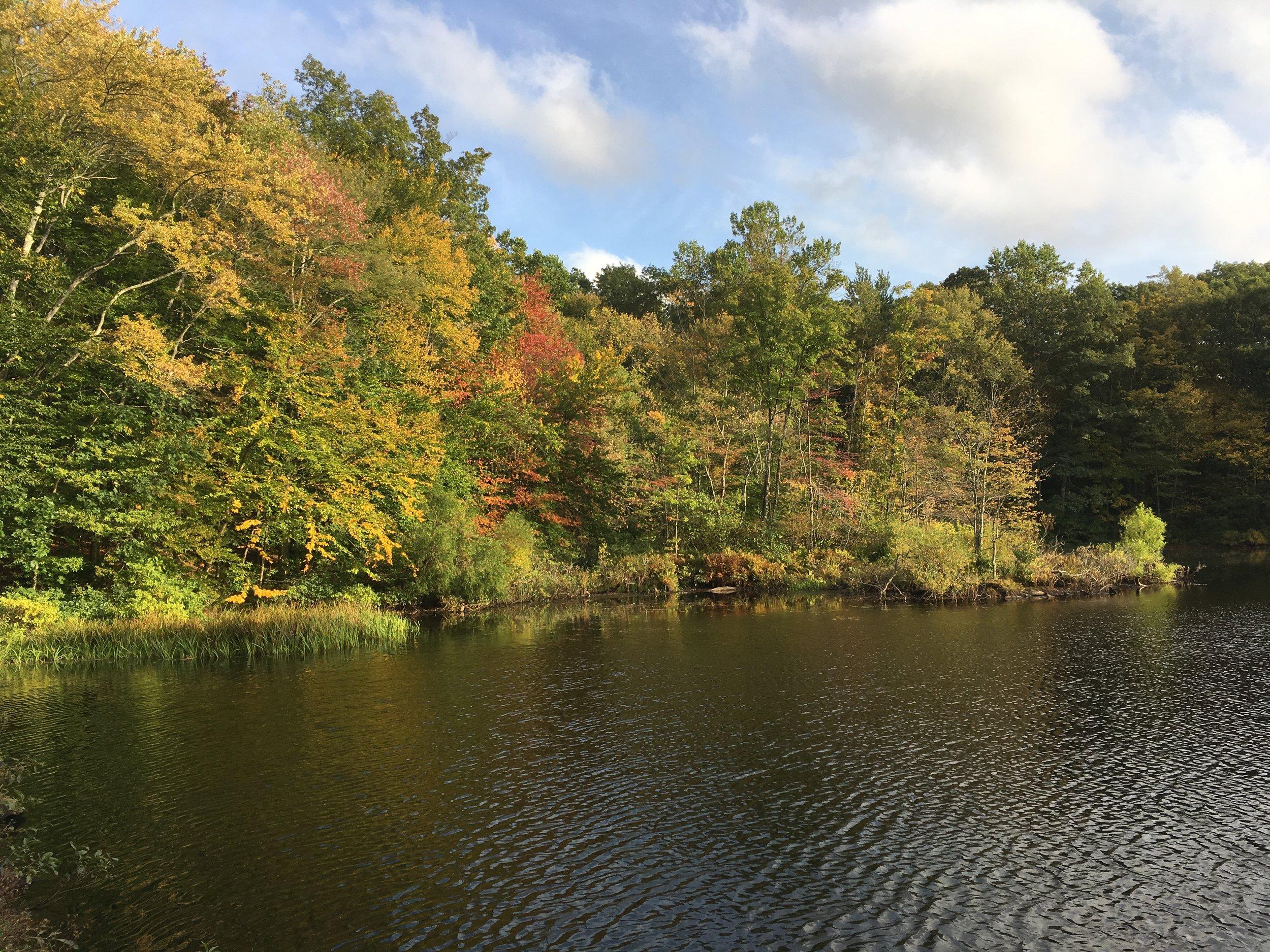 A Hike around the Weir Farm Pond, Ridgefield