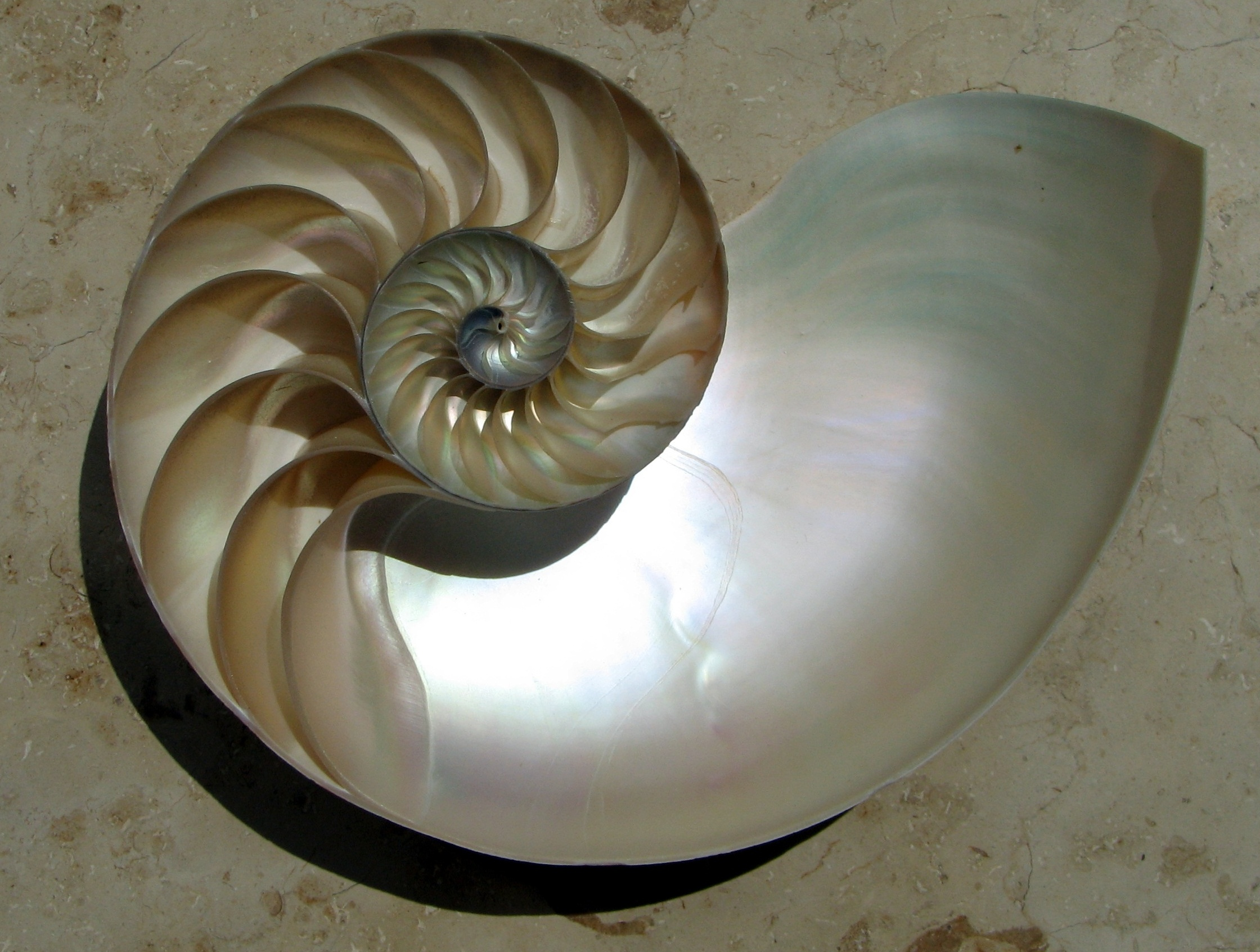 ...from sea shells...