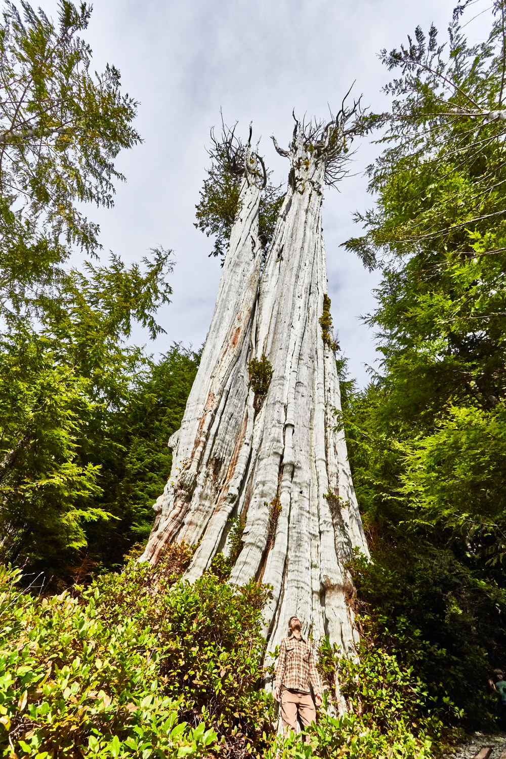 This tree is bigger than it looks in this photo shot with a wide-angle lens.
