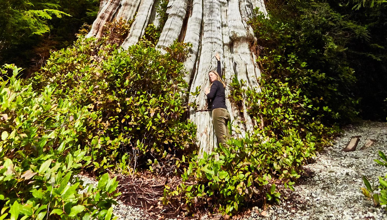 Kat Big Tree 3.png