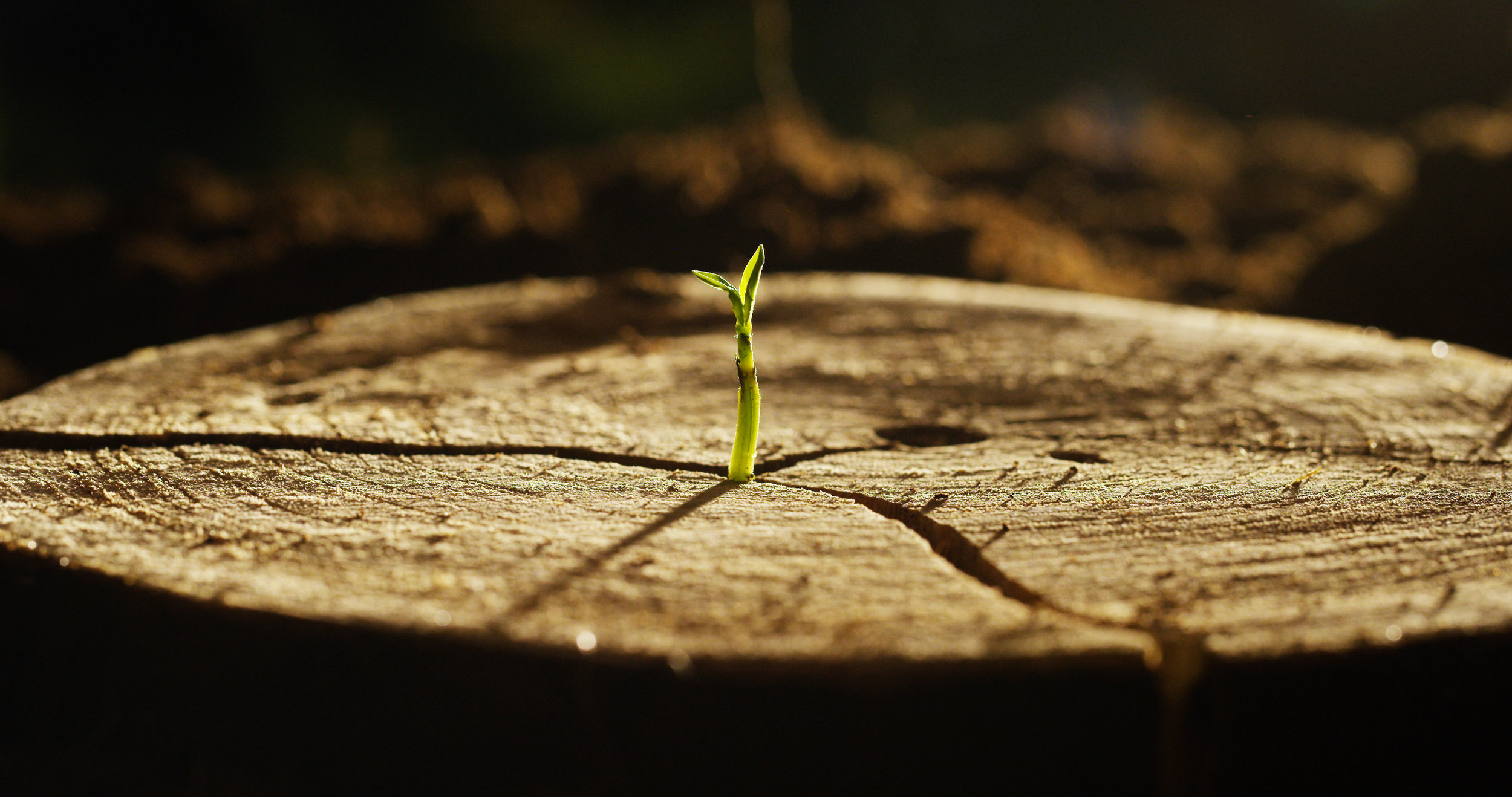 Ecological intelligence mentorship program - Finding Your Way Guided by the Living Earth