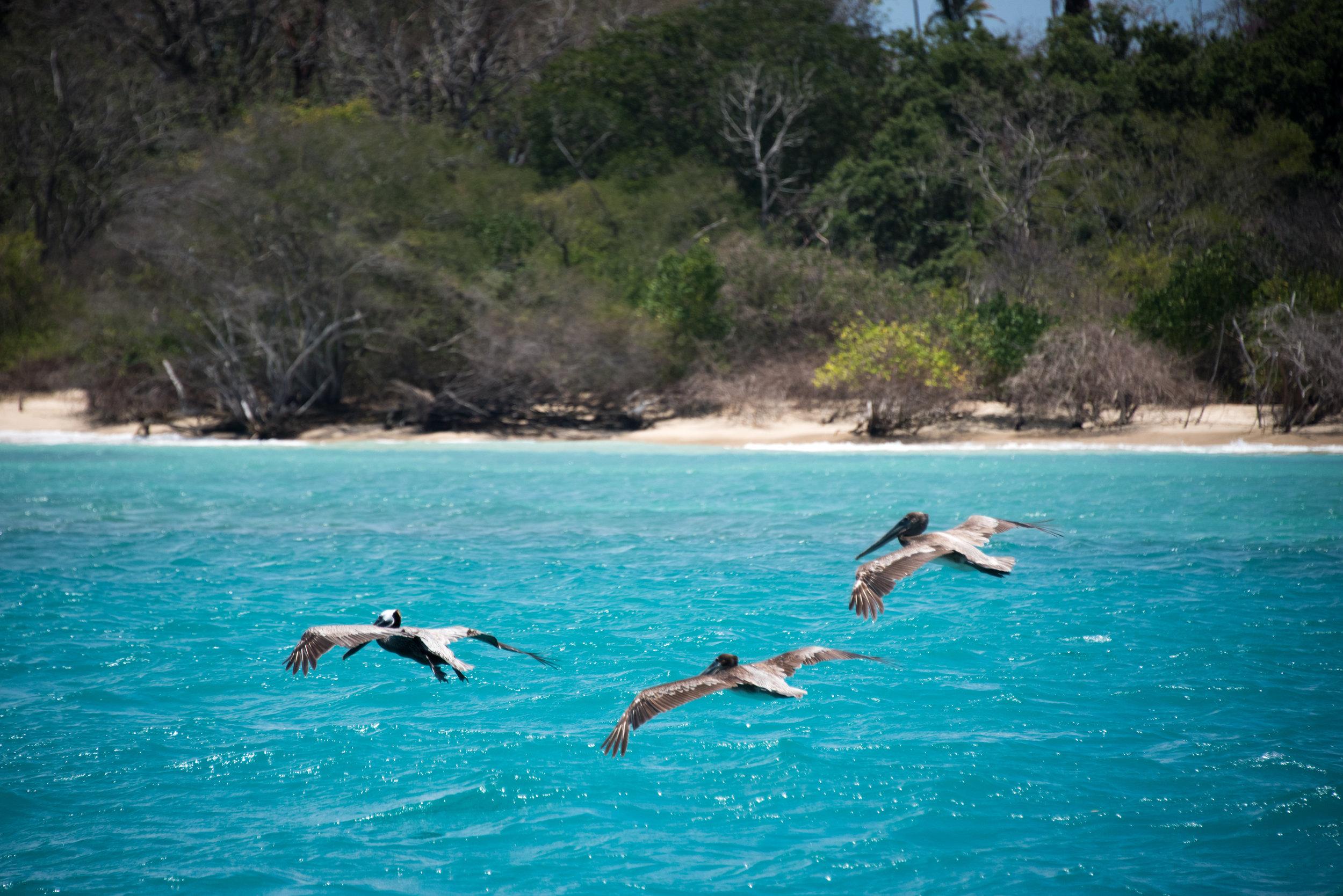 170422_Barrie Fisher_Tobago-503.jpg