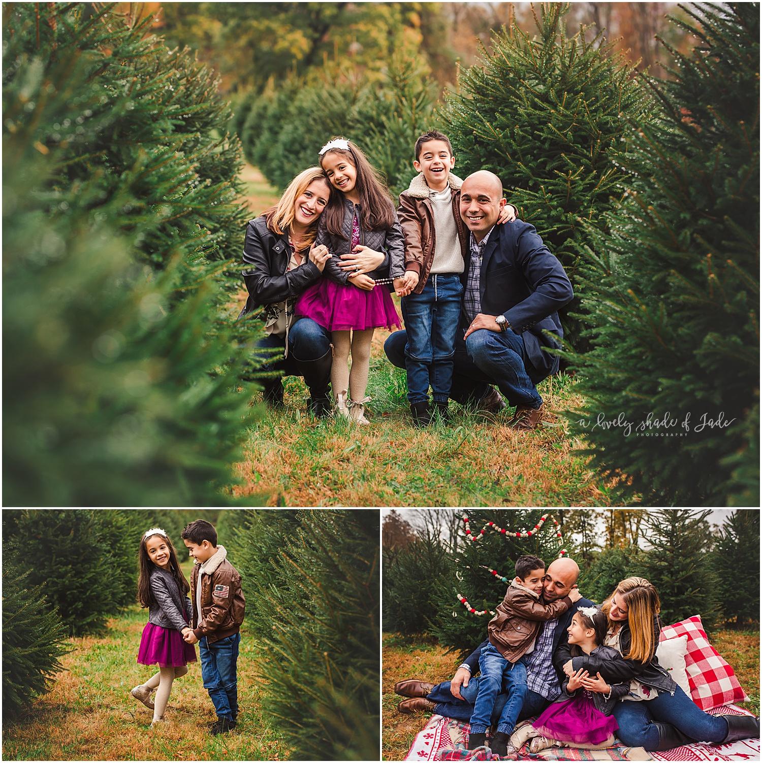 Brianne_Tree_Farm_Minis_Mendham_NJ_0002-1.jpg