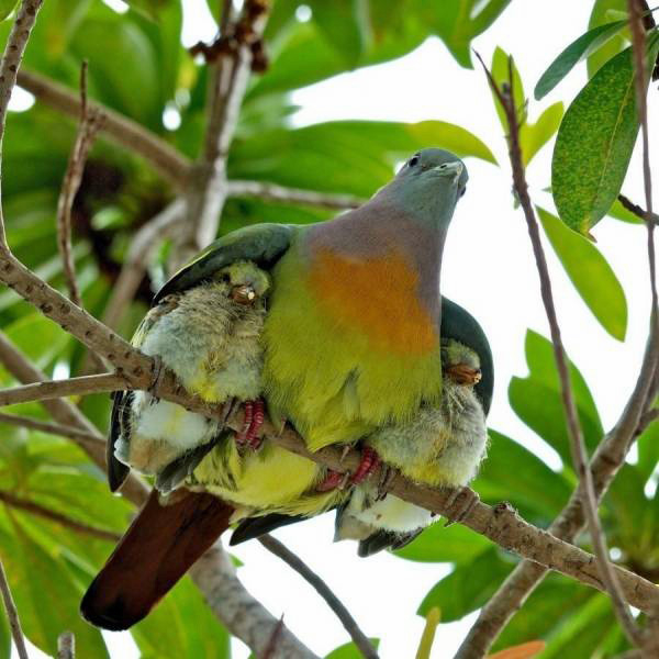 Psalm 91:4  Under His Wings