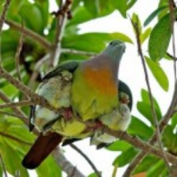 Mama bird with babes under wing