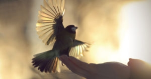 elation-bird-set-free-300x158.jpg